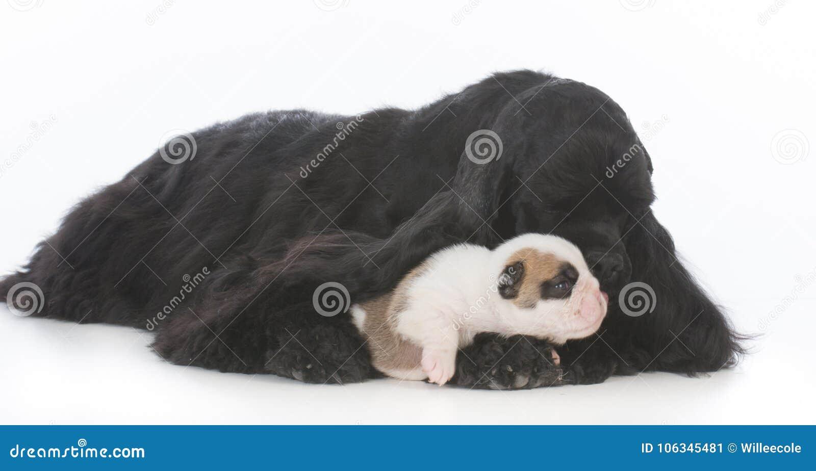 Osierocony szczeniak podnosi zastępczą matką