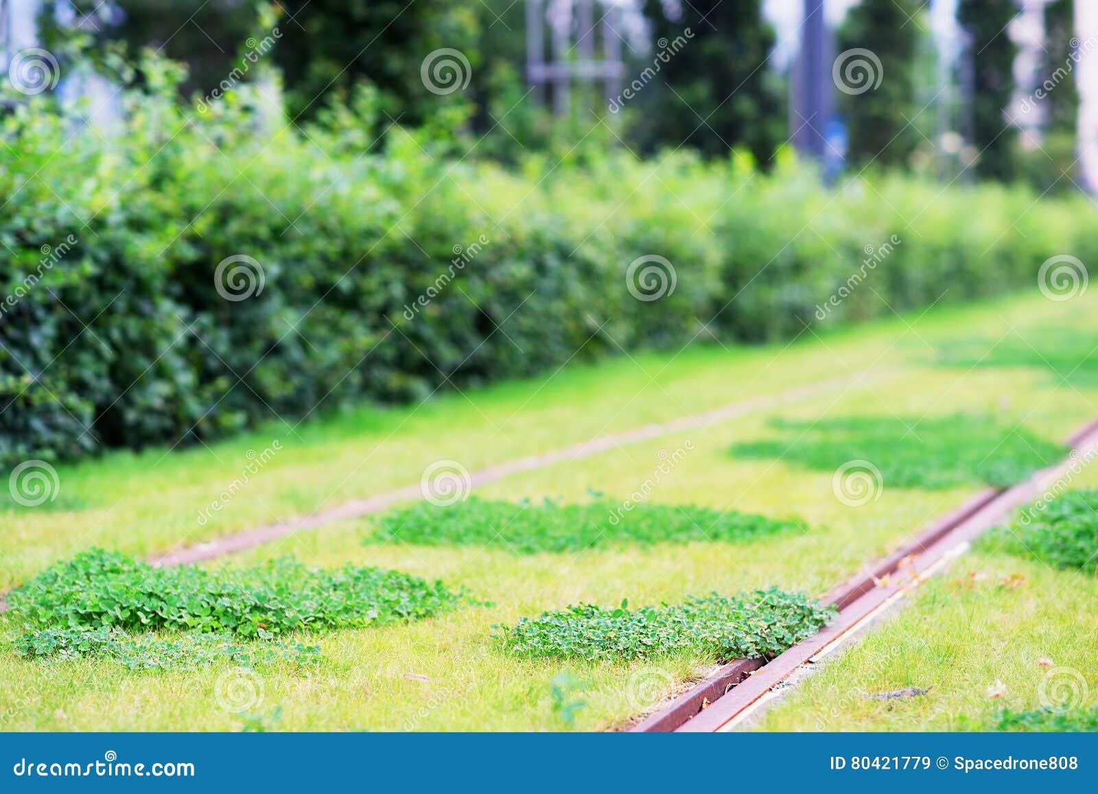 Download 610 Koleksi Background Hd Grass HD Terbaru