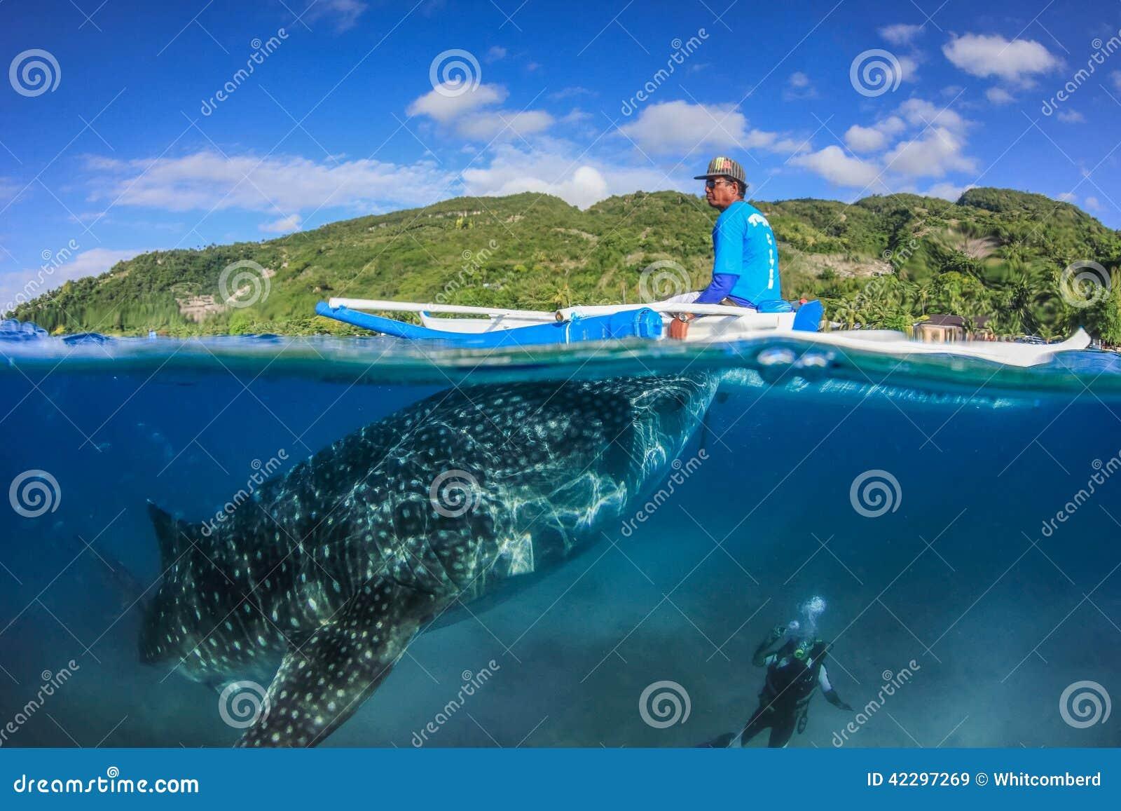 OSLOB, FILIPPINE - 1° APRILE 2014: Grande squalo balena, pescatore