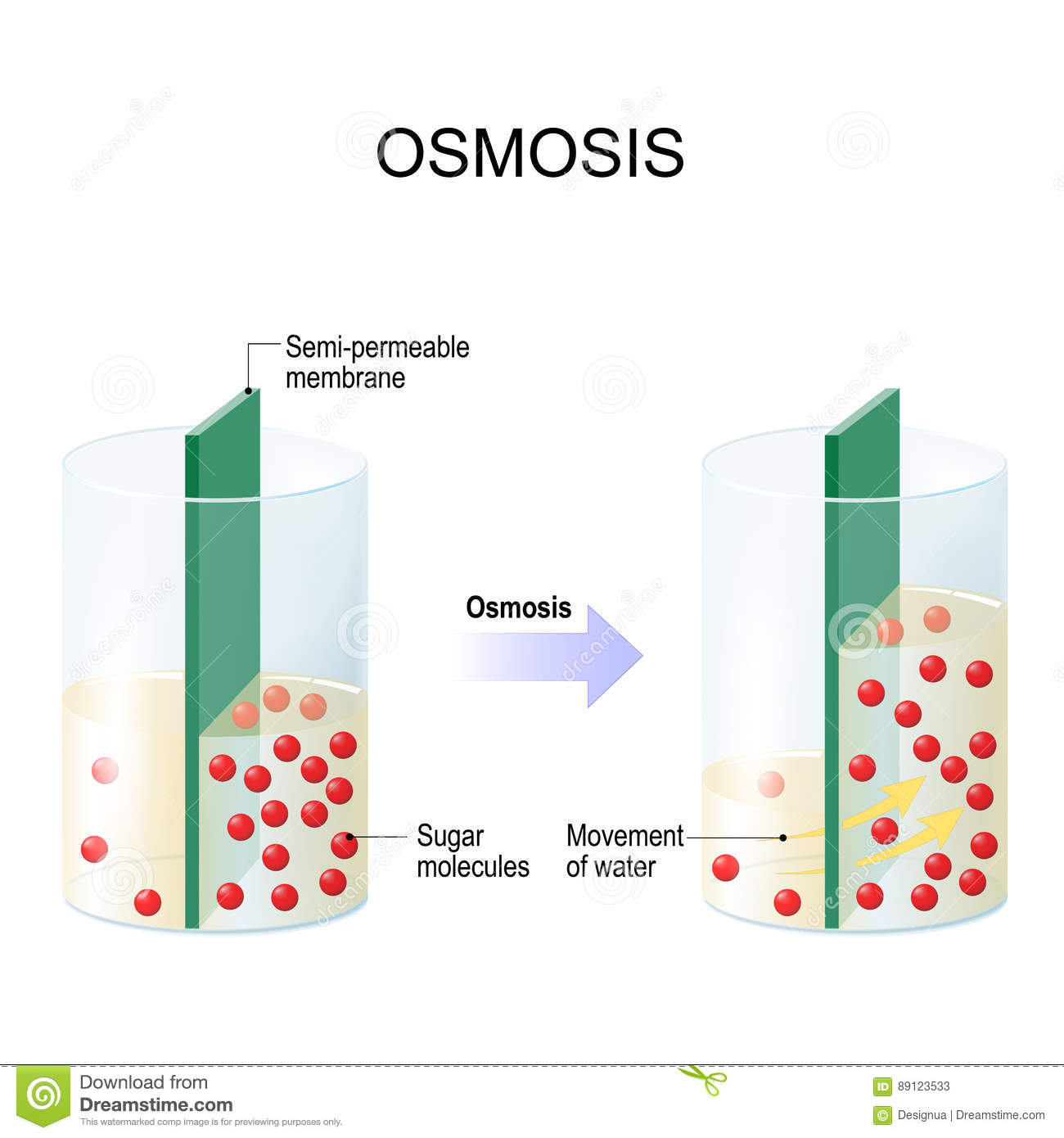 osmosis and water This lab was done to examine and comprehend how diffusion and osmosis works in diverse molarity of sucrose also how the solutions permeates.