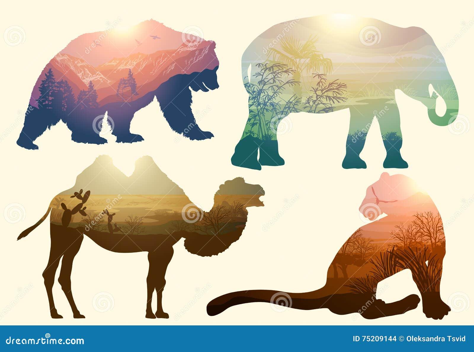 Oso, elefante, camello y leopardo, fauna