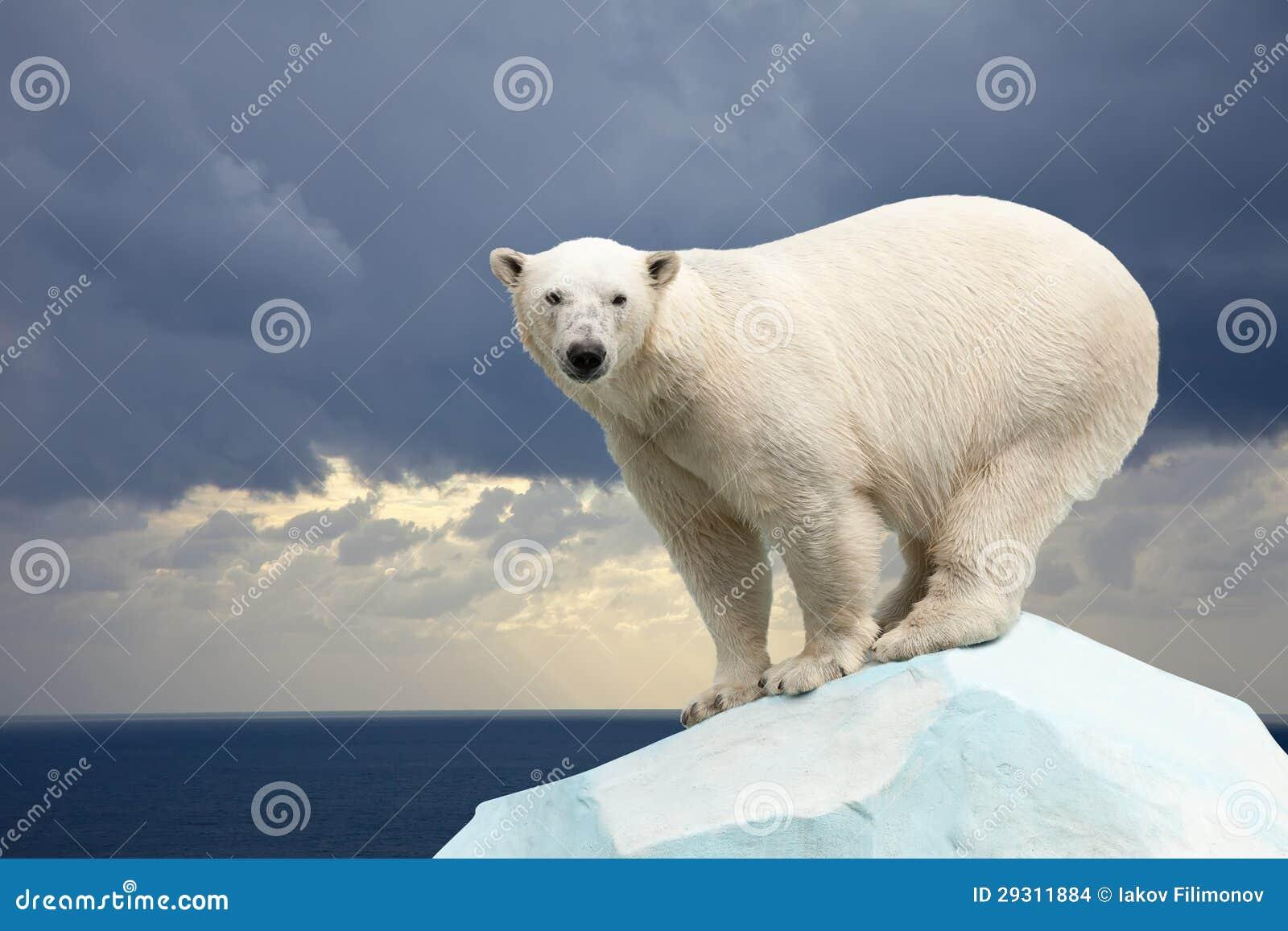 Oso polar contra paisaje del mar