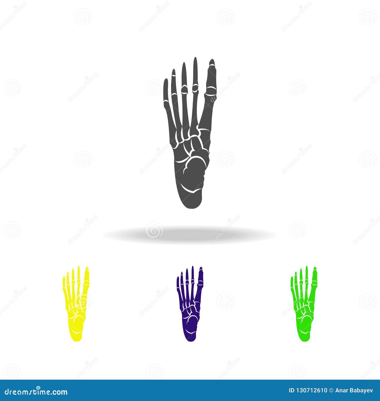 Ospite delle icone multicolori dell organo del piede Elemento delle icone multicolori delle parti del corpo Segni ed icona della