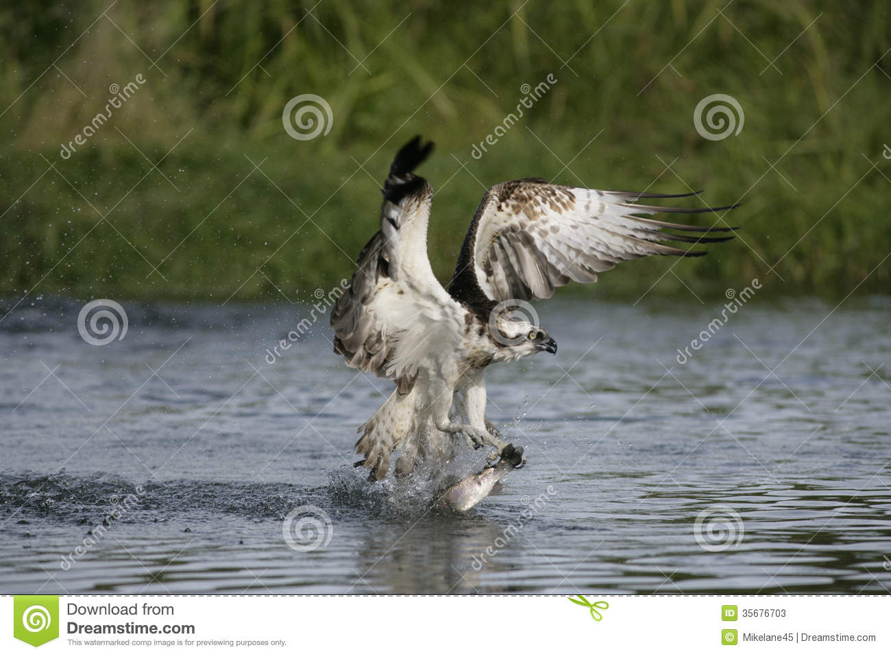 osprey divorced singles personals Others start dating right away, as a distraction or to combat feelings of loneliness and in some cases, an affair triggered the divorce from a legal perspective, it's best to.