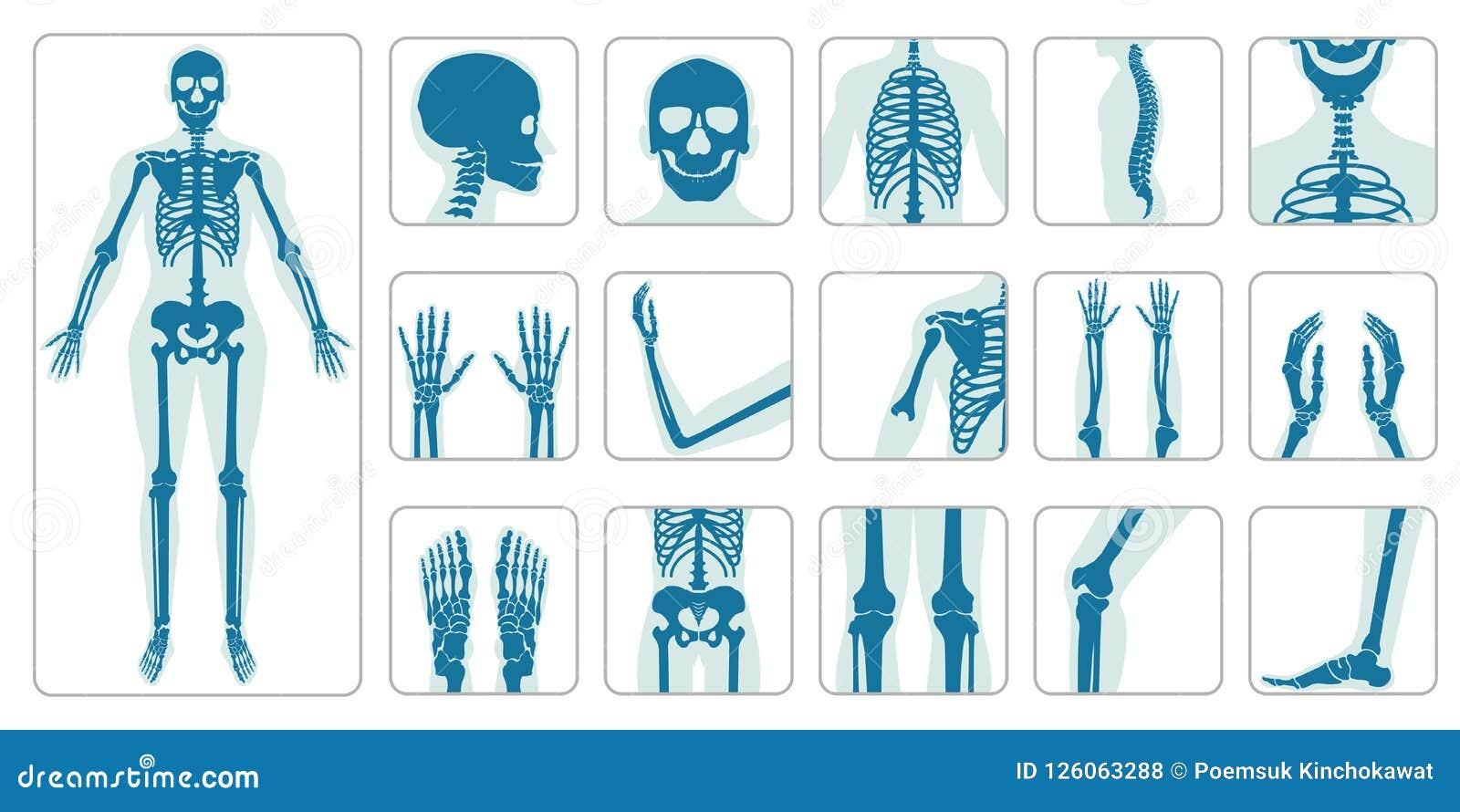 Ossa umane ortopediche ed insieme di scheletro dell icona