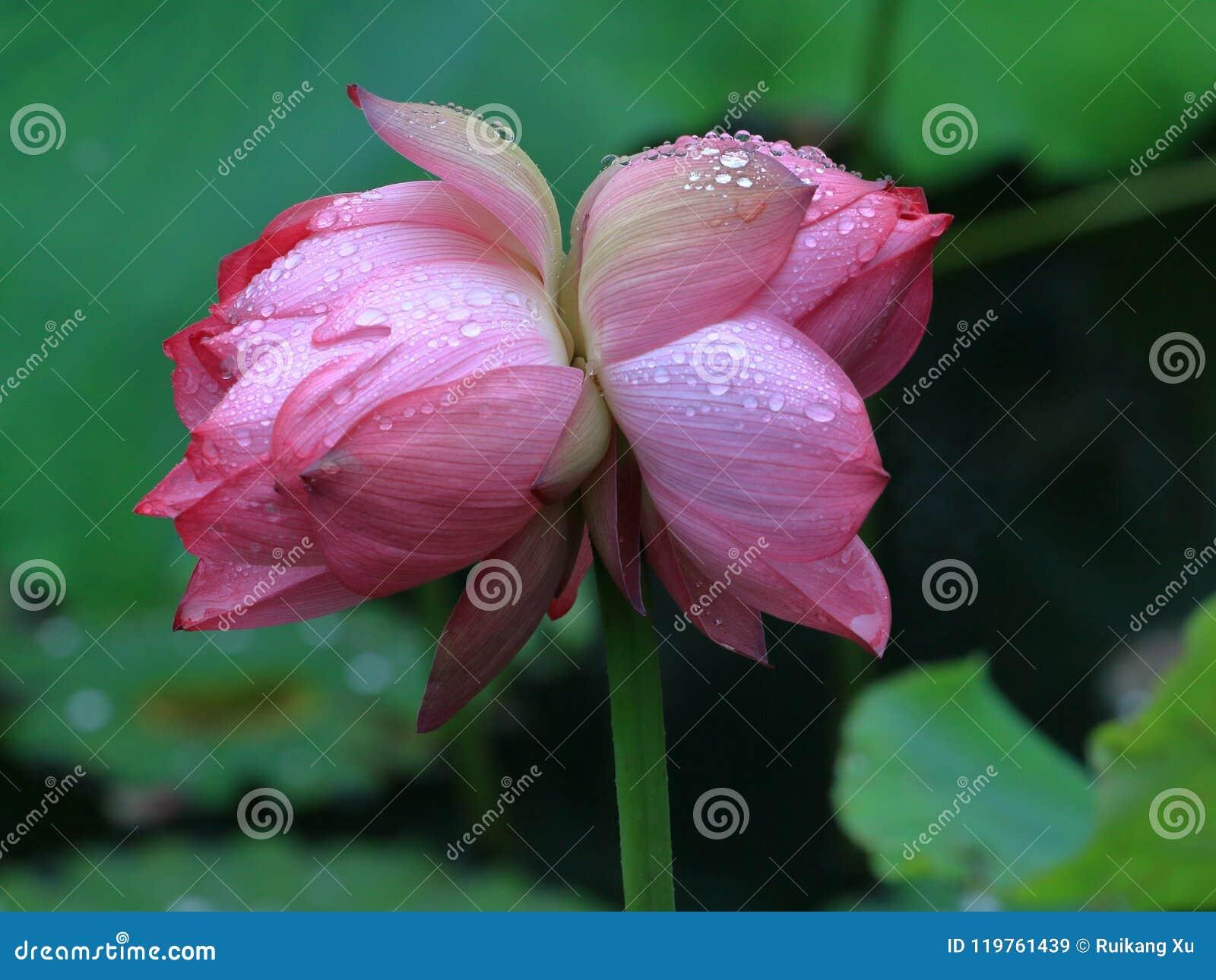 Ostateczny w cncondom należy lotos , ja no może ono reprodukować no należy rozmaitość i może tylko być n, genetyczne,