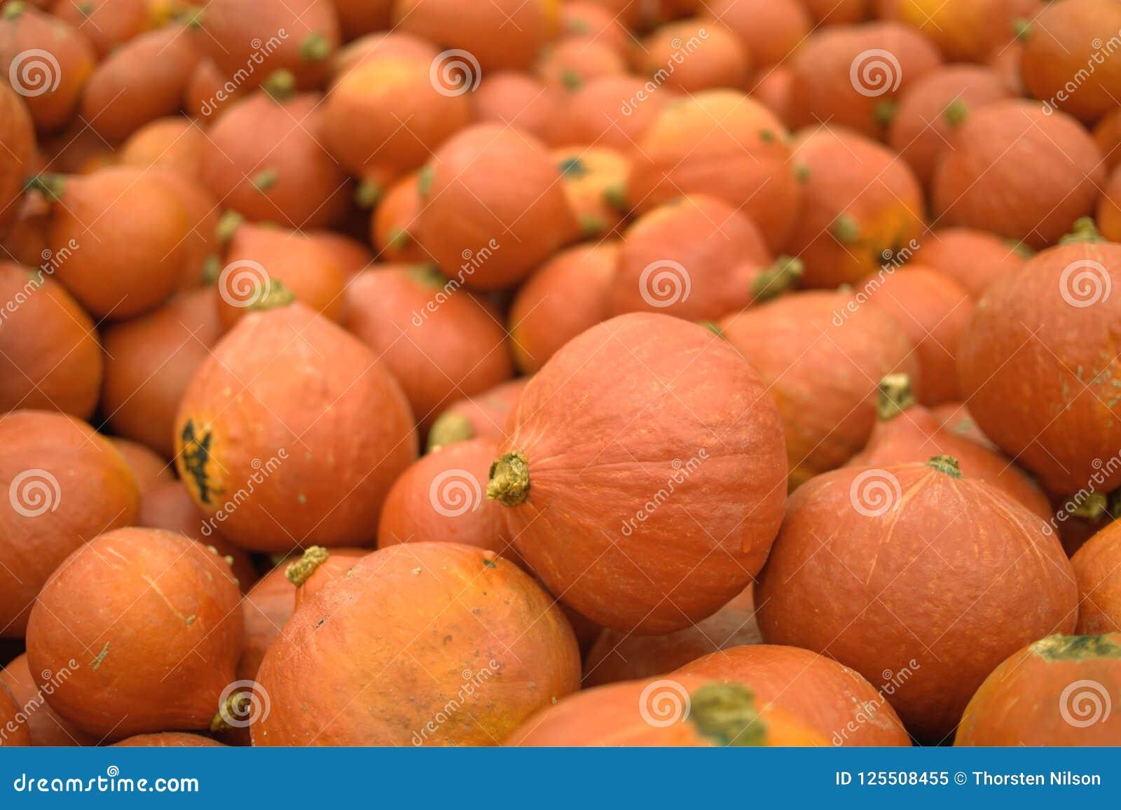 Ostatnio zbierać pomarańczowe banie dla sprzedaży