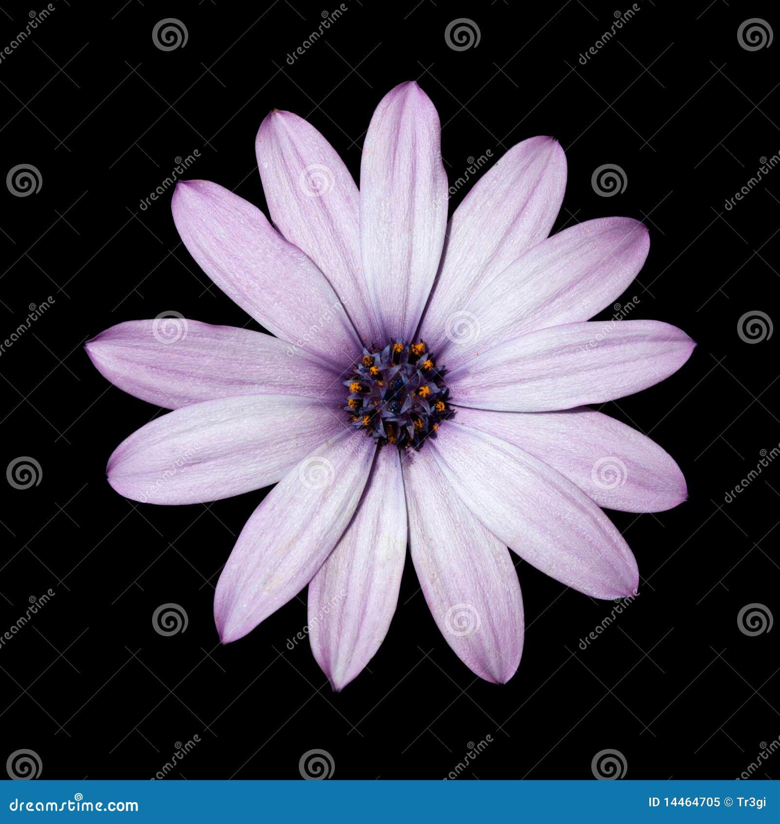 Odeur jardin : parfums - choix plantes - fleurs - idées