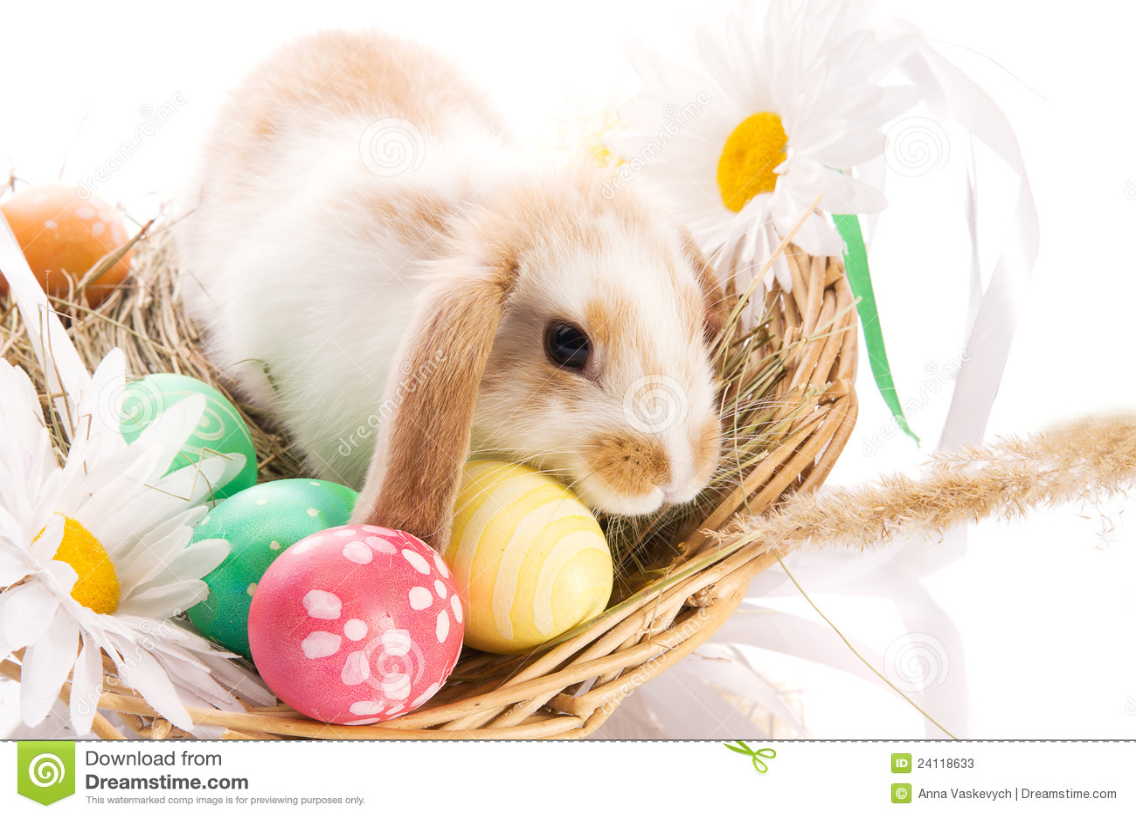 osterhase in einem korb mit eiern stockbild  bild von