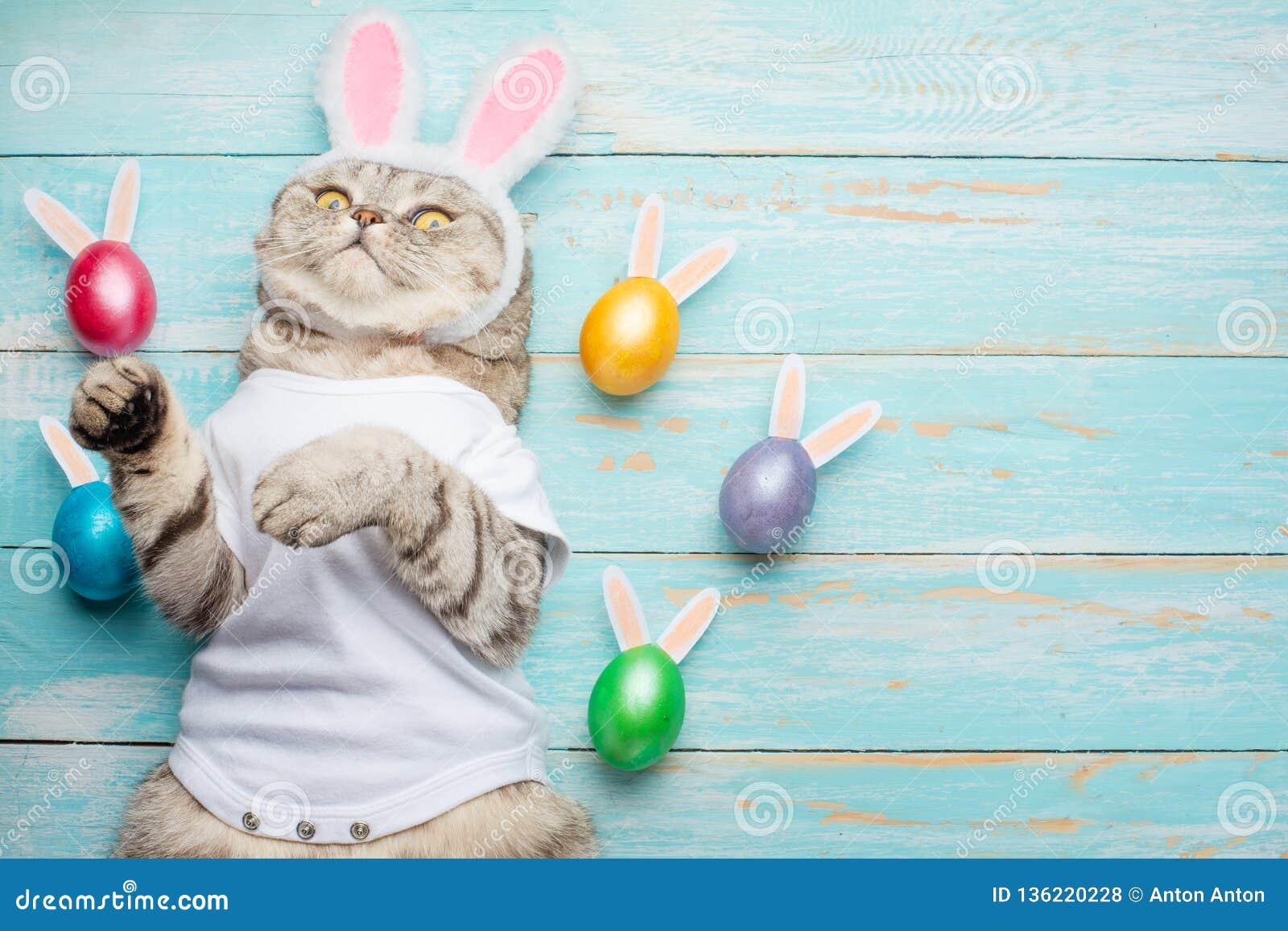 Osterhase, Katze mit den Häschenohren und Ostern färbten mit Eiern und den Ohren Ostern und Feiertag
