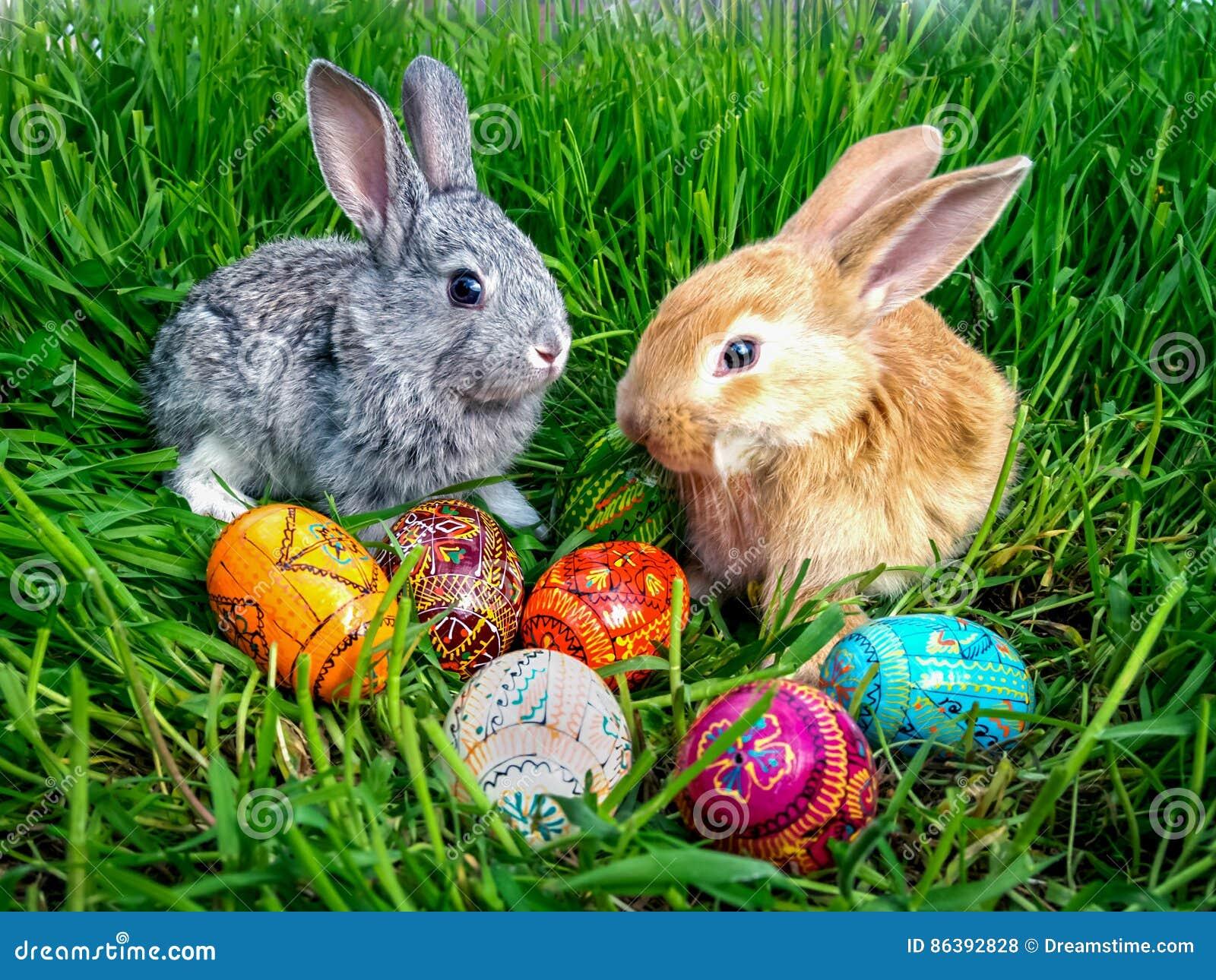Osterhase mit Eiern auf grünem Gras
