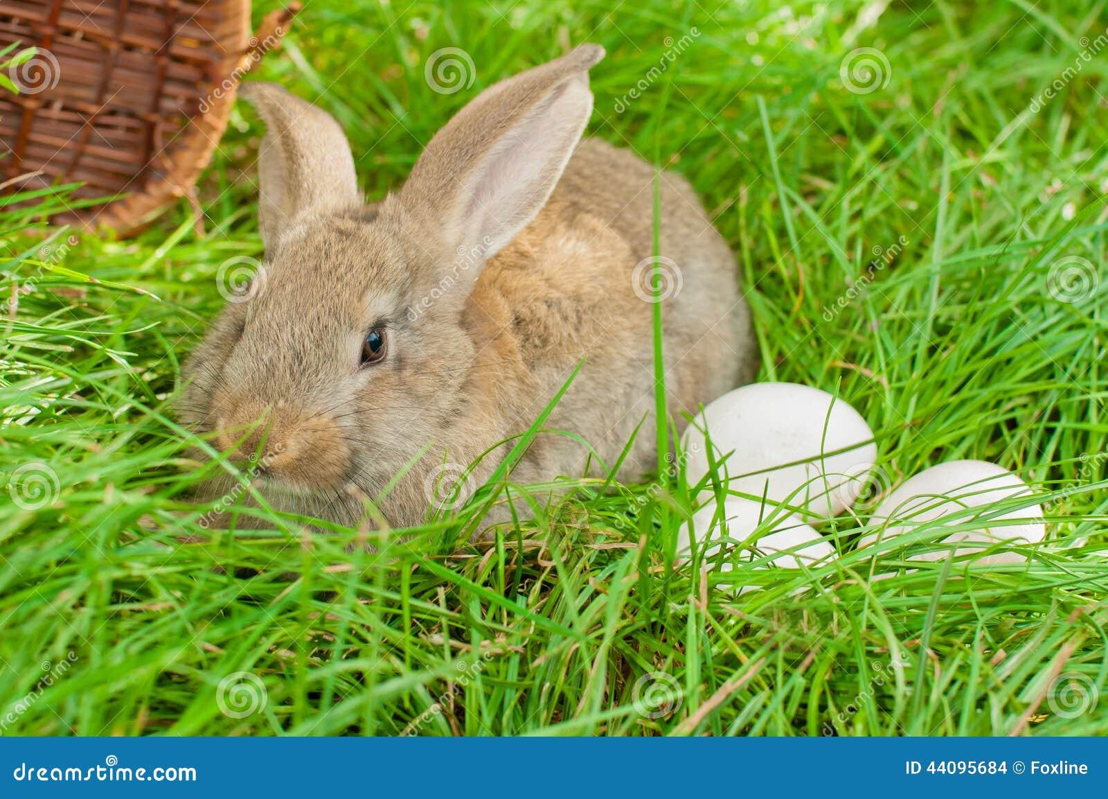 osterhase mit eiern im korb stockfoto  bild von feiern