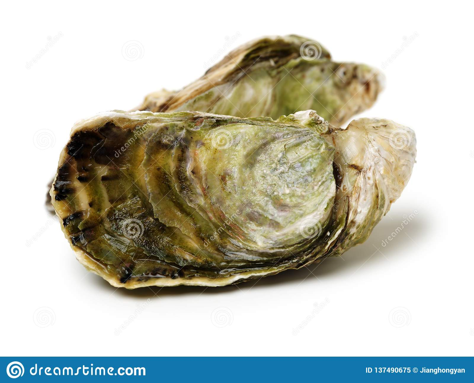 Ostra del mar Bivalvo, invertebrados