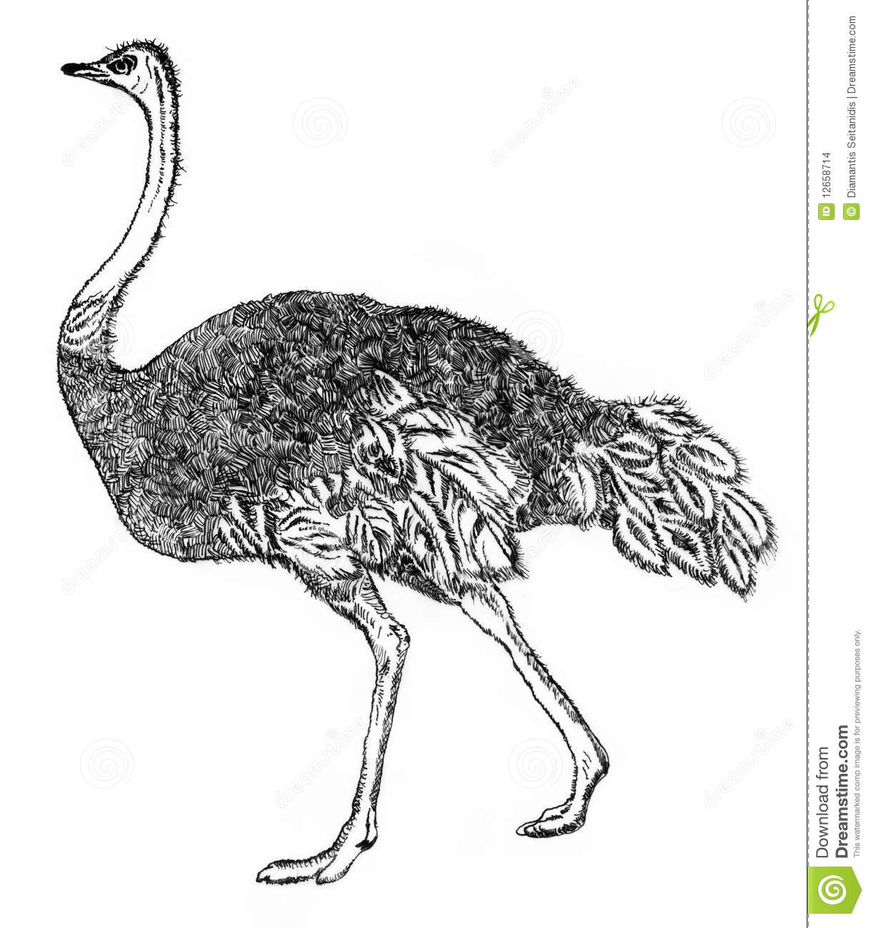How to draw a realistic ostrich  Step by step Drawing