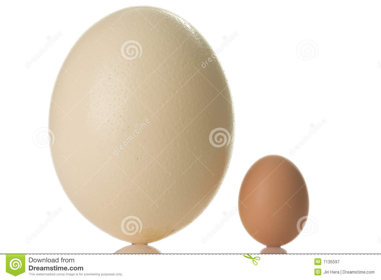 Ostrich Egg Stock Image Image Of Ostrich Huge Size