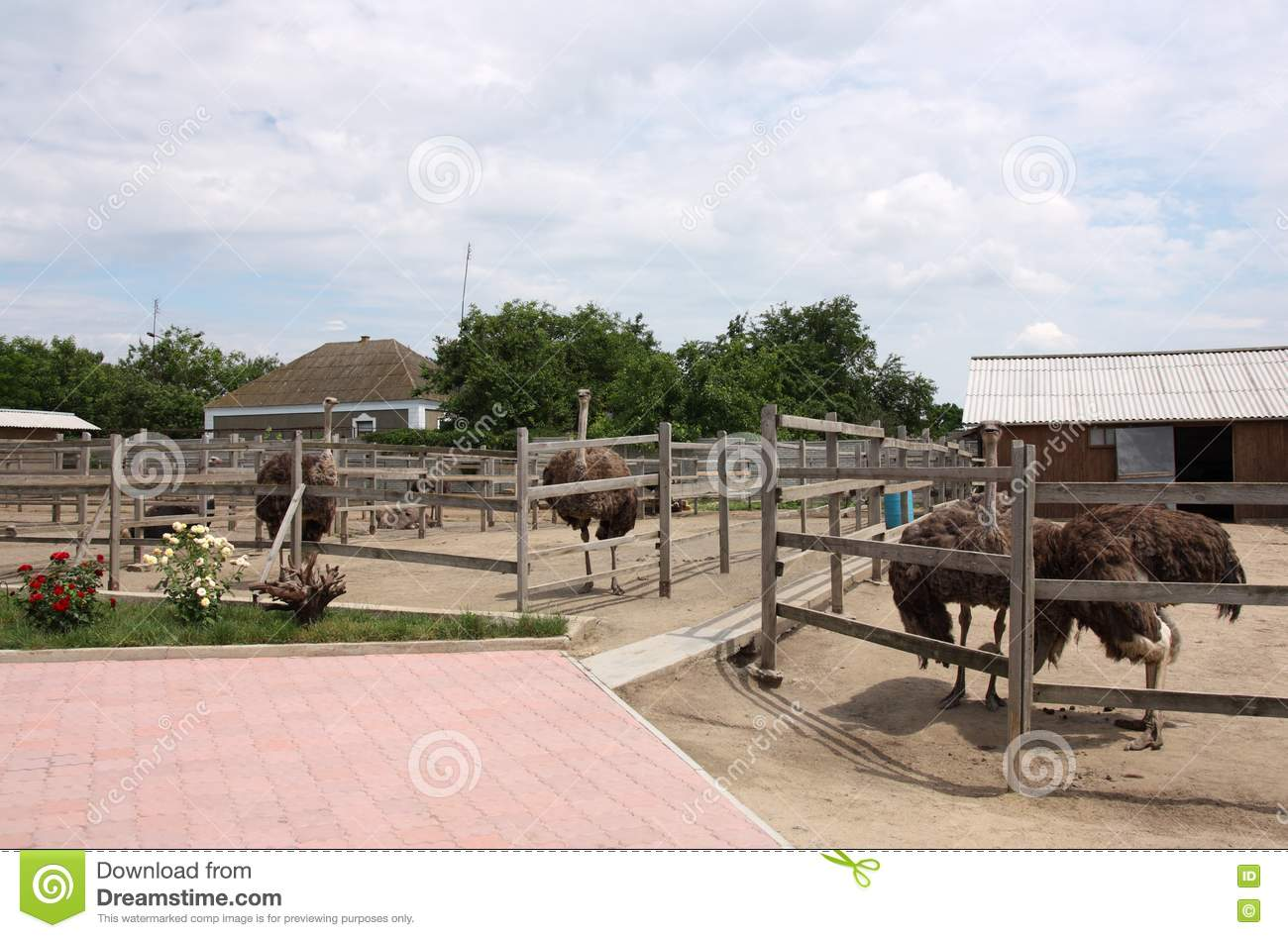 Starting your Ostrich Farm – Sample Business Plan Template