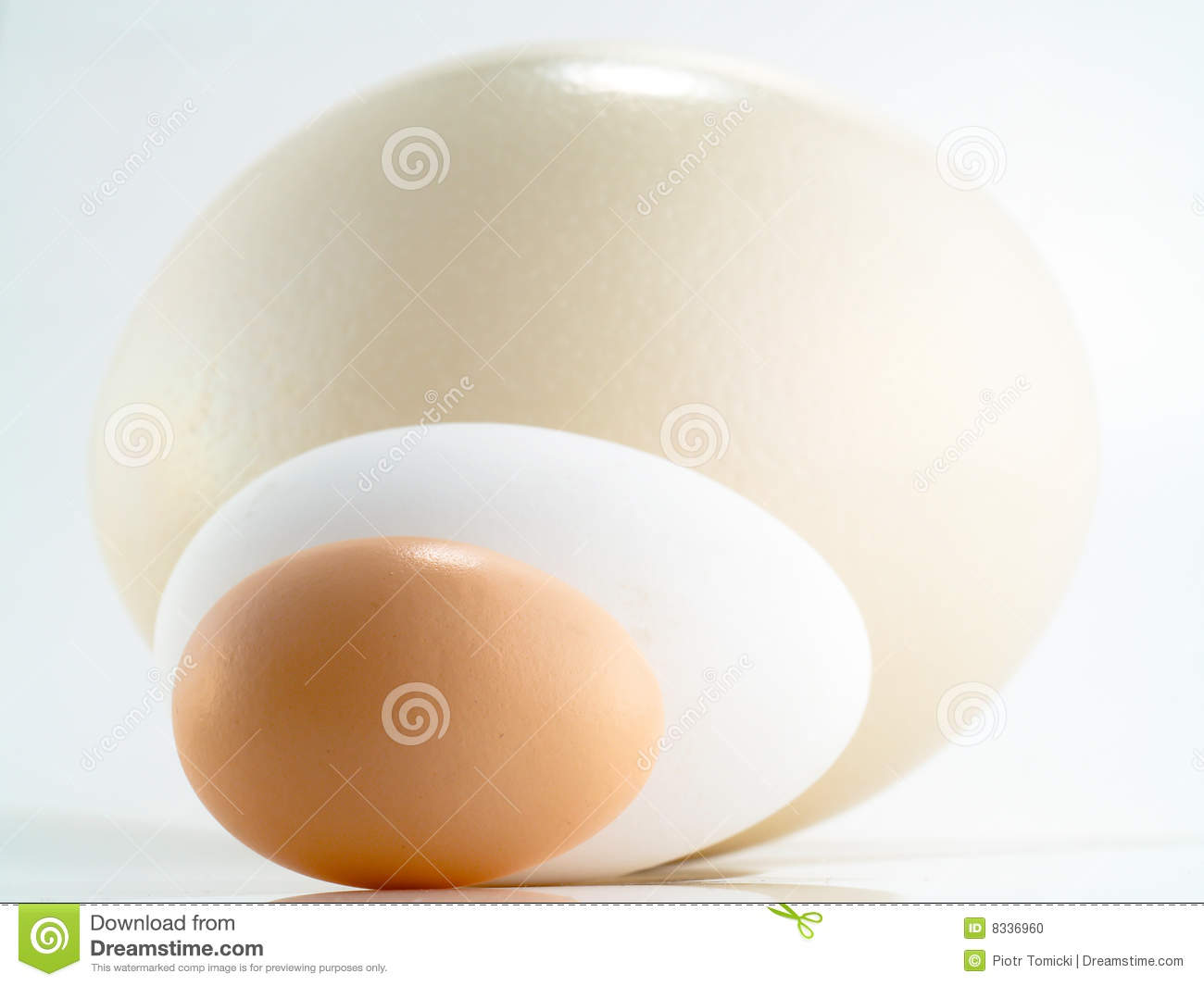 Ostrich, goose and hen s egg