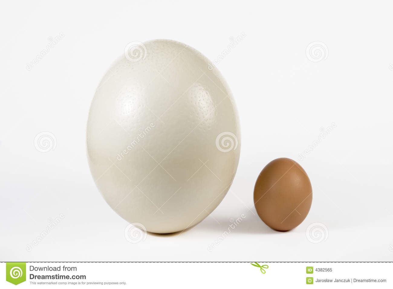 Ostrich and hen egg