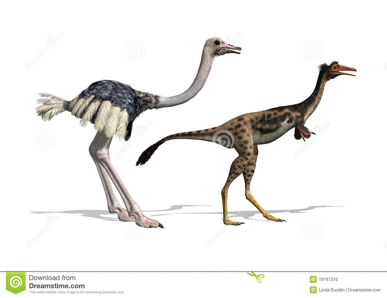 Ostrich And Mononykus Dinosaur Comparision Stock