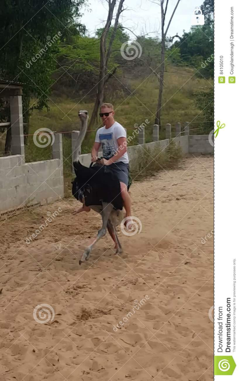 Download Ostrich riding stock photo. Image of vietnam, east, stream - 84105010