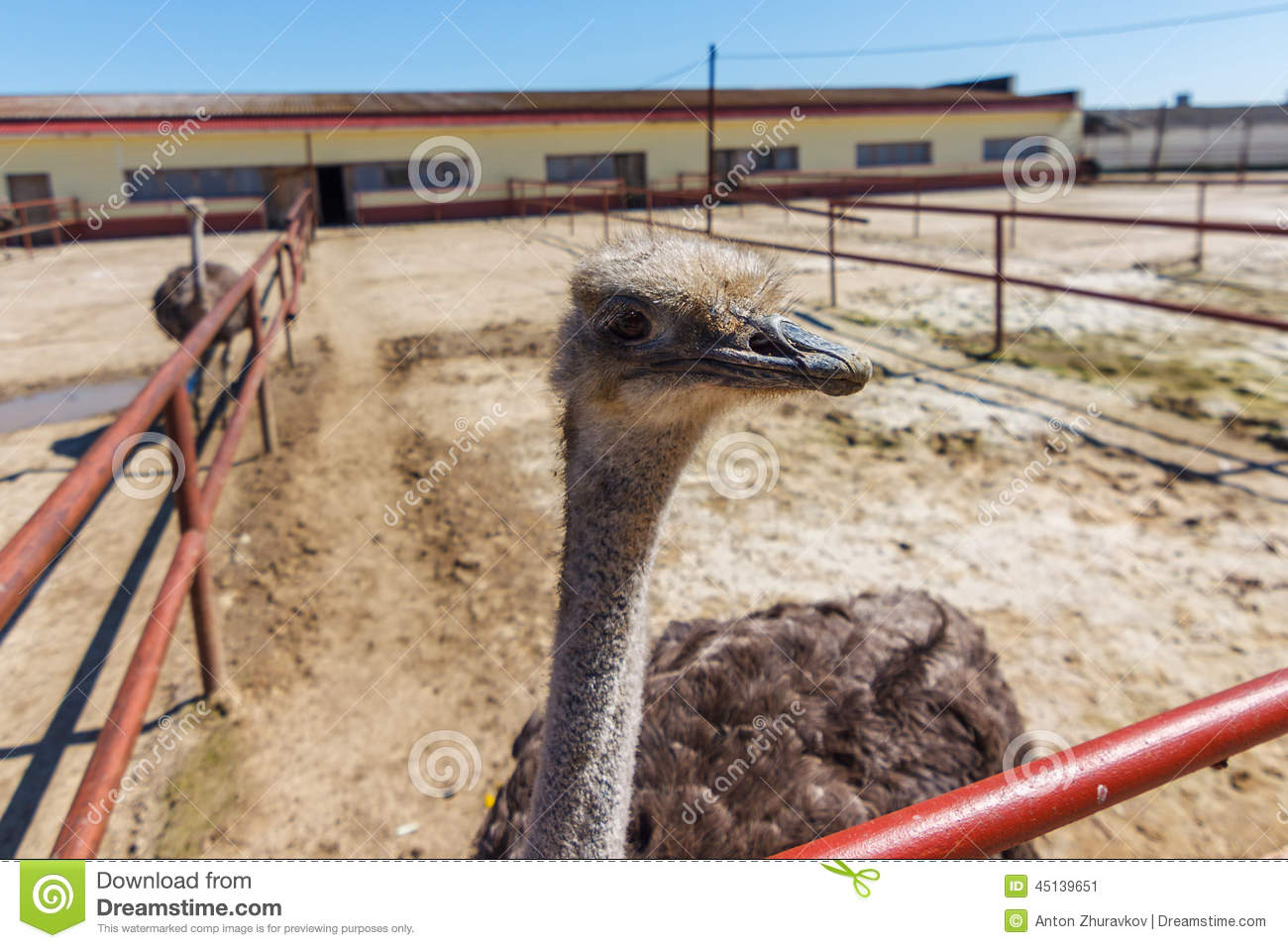 How to Start Ostrich Farming in Pakistan | Complete Business Plan