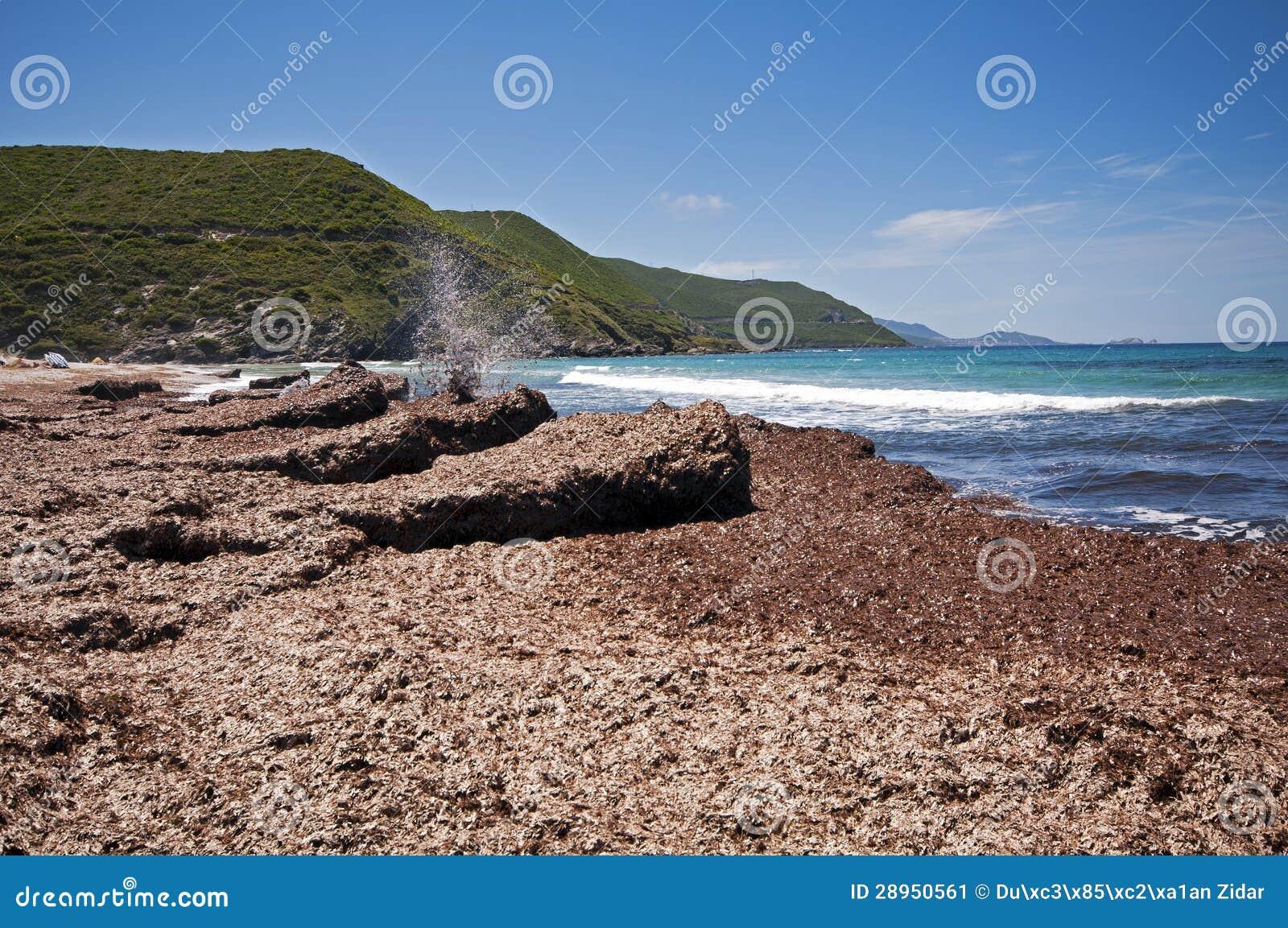 Ostriconi plaża