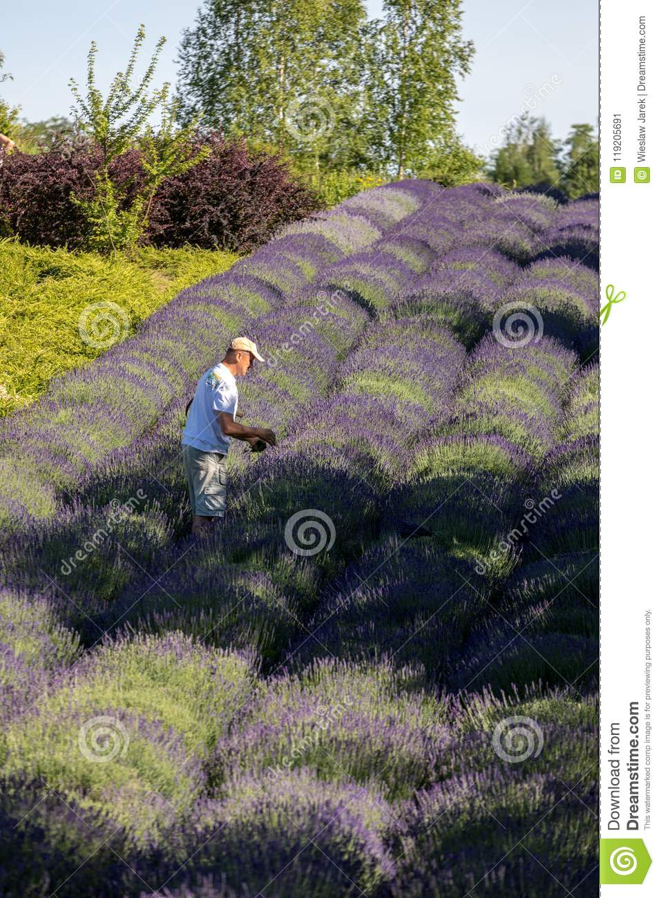 A `Garden full of lavender` arranged by Barbara and Andrzej Olender in Ostrów 40 km from Krakow. The smell and color of lavender