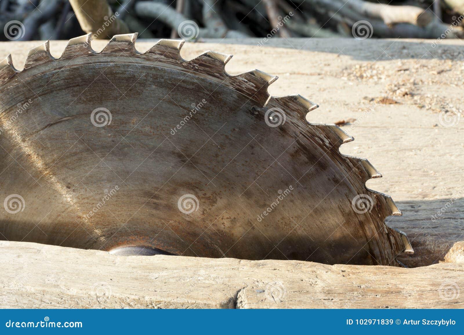 Ostrze okólniki blisko piły się Kurenda Zobaczył na drewnianym tle z światłem dziennym