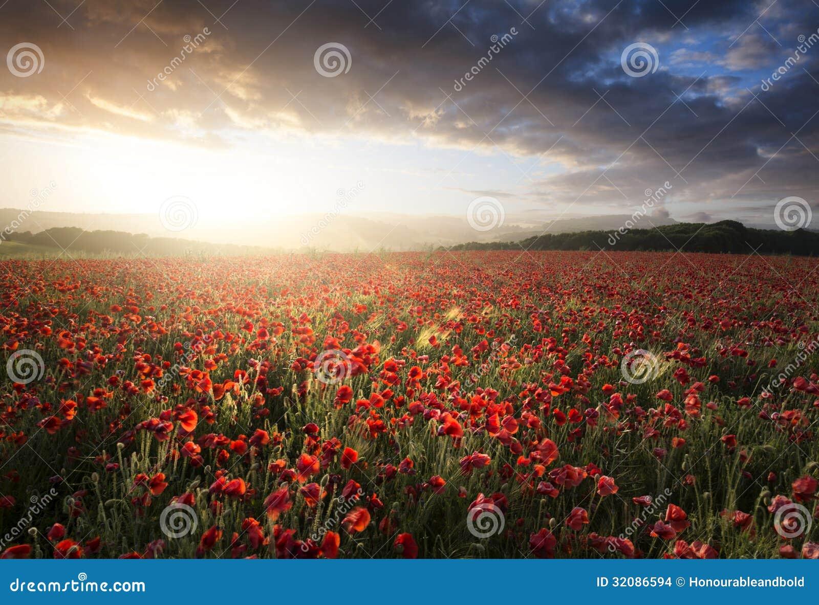 Oszałamiająco maczka pola krajobraz pod lato zmierzchu niebem