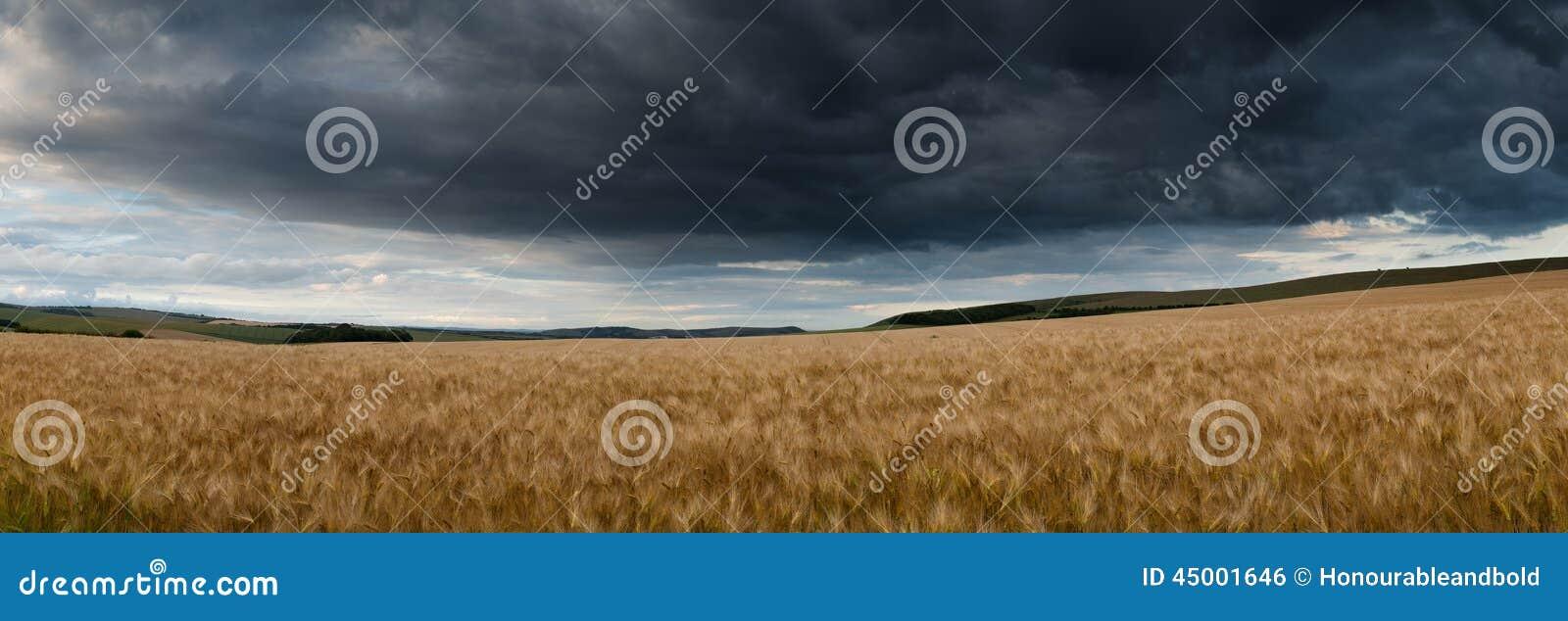 Oszałamiająco wsi panoramy krajobrazu pszeniczny pole w lecie su