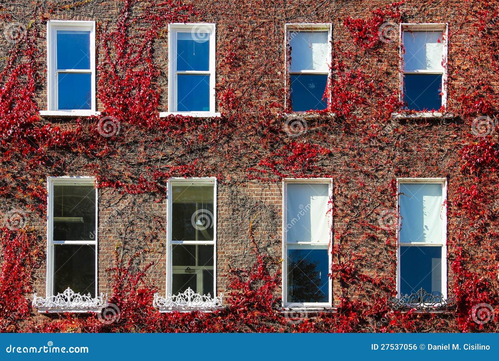 Otaczający bluszczem gruzińscy okno. dublin.Ireland