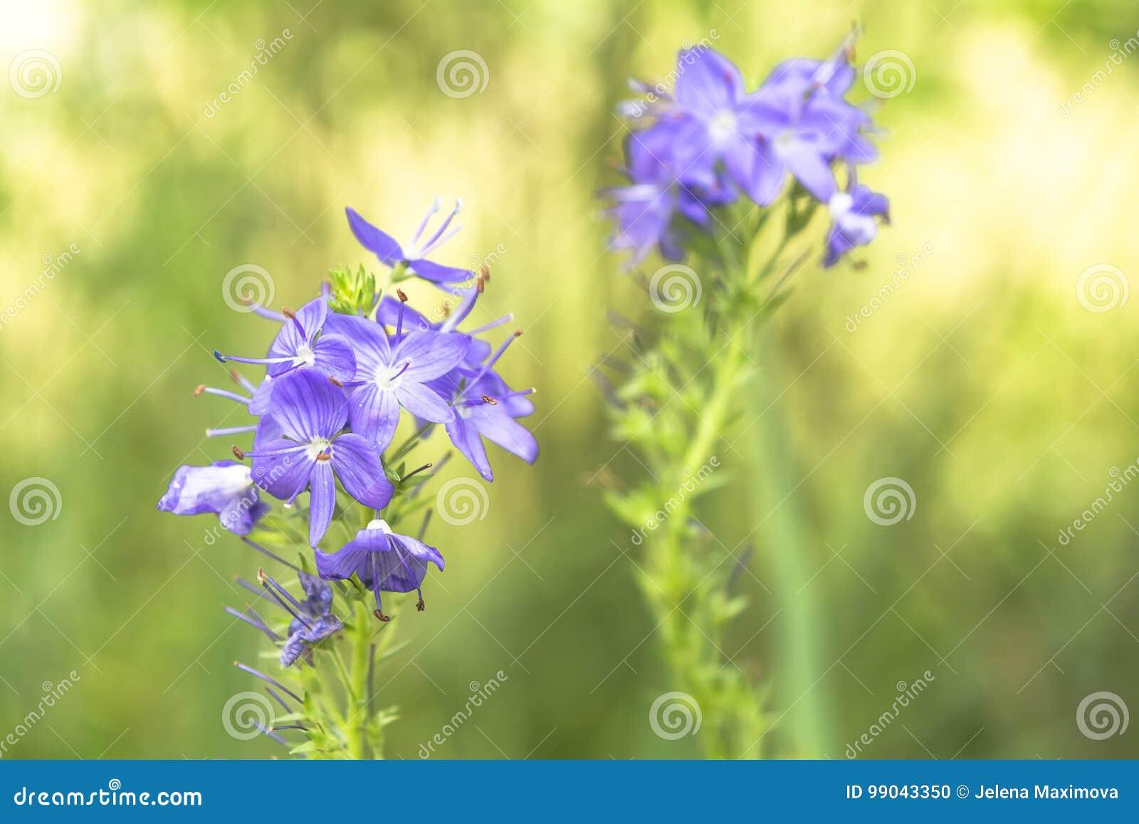 Blue flowers stock photo image of season macro blue 99043350 blue flowers izmirmasajfo
