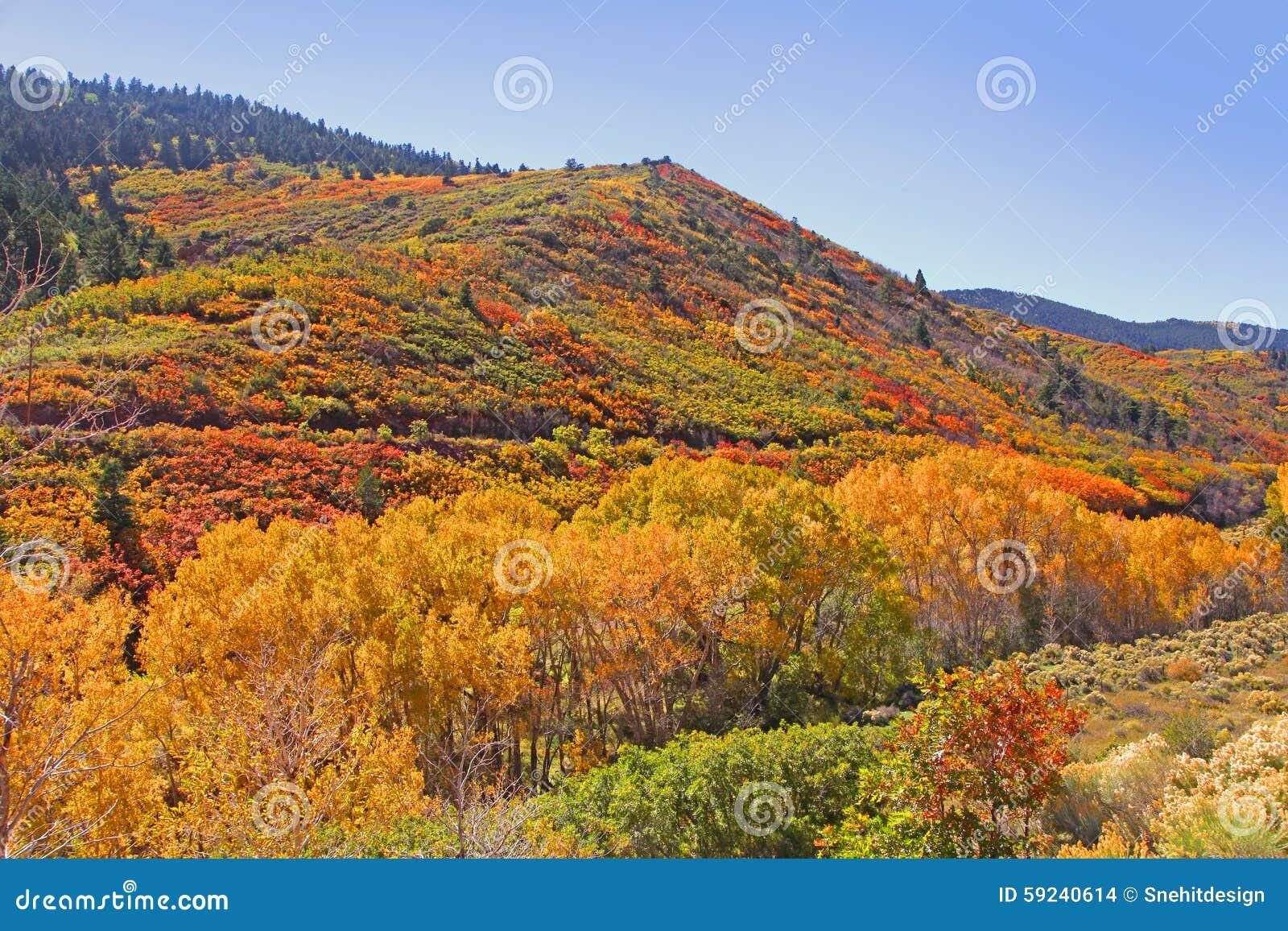 Download Otoño en Colorado foto de archivo. Imagen de aspen, américa - 59240614