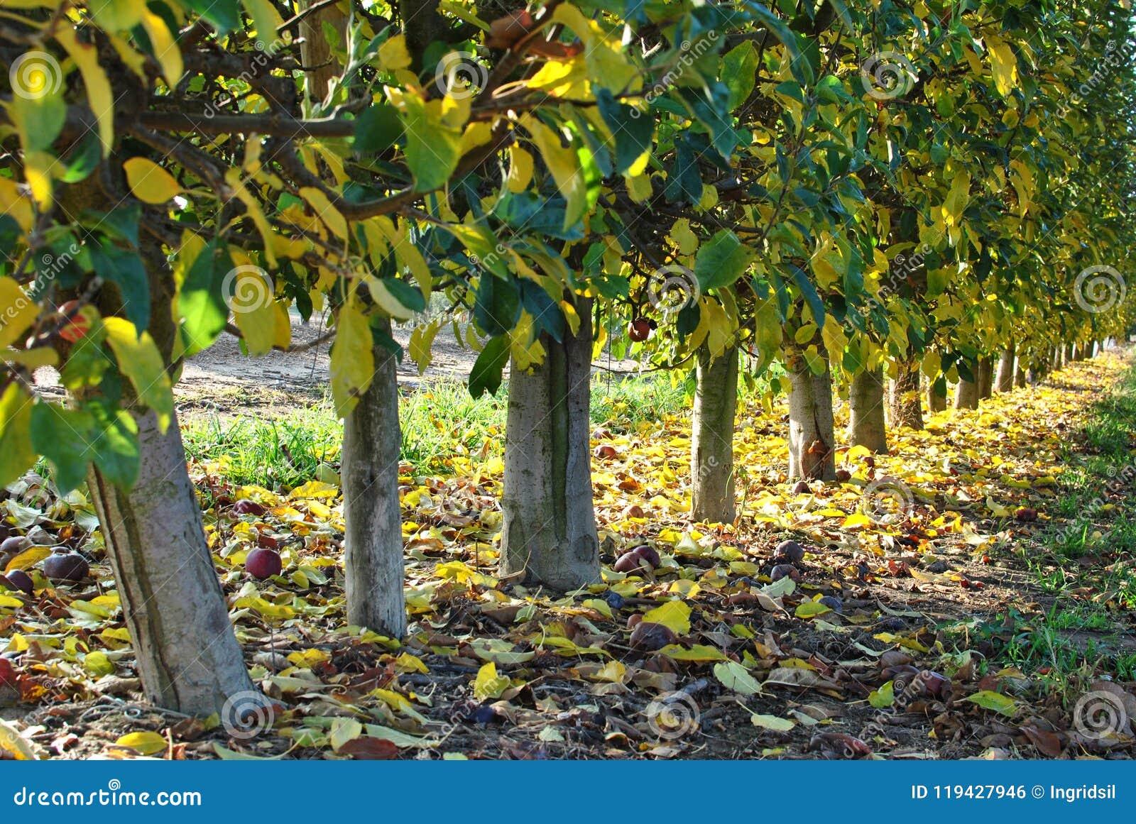Otoño Hojas caidas del amarillo