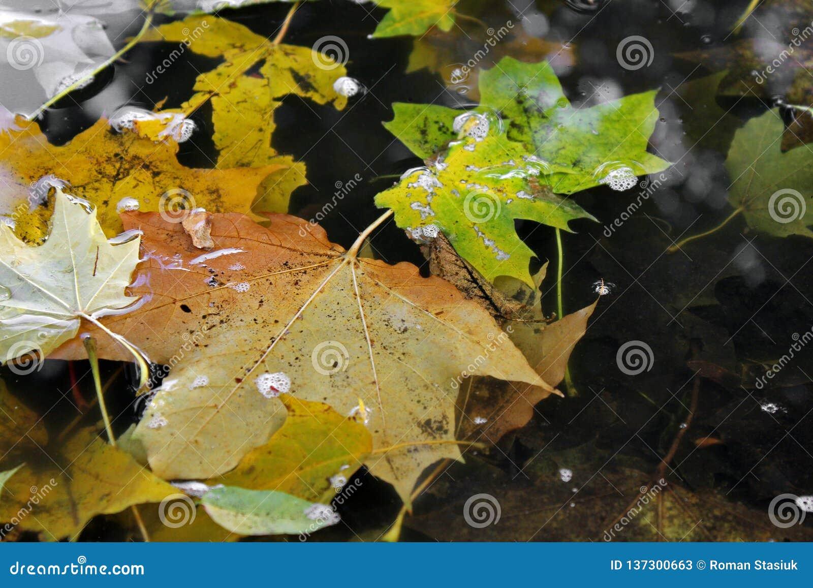 Otoño Hojas de otoño en agua