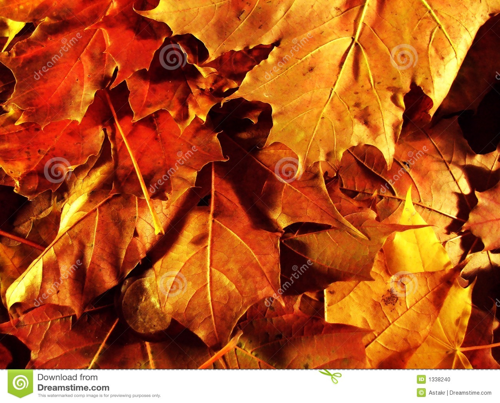 Otoño leaves2