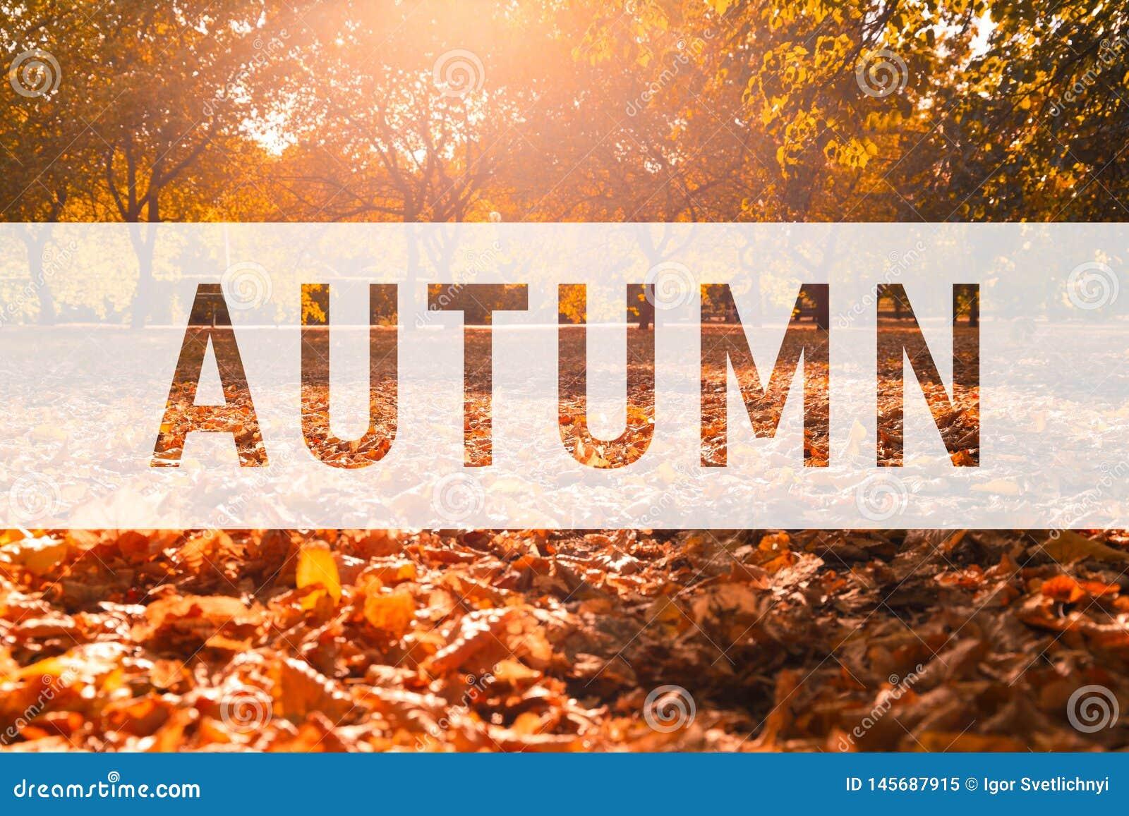 Otoño, saludando el texto en las hojas coloridas de la caída