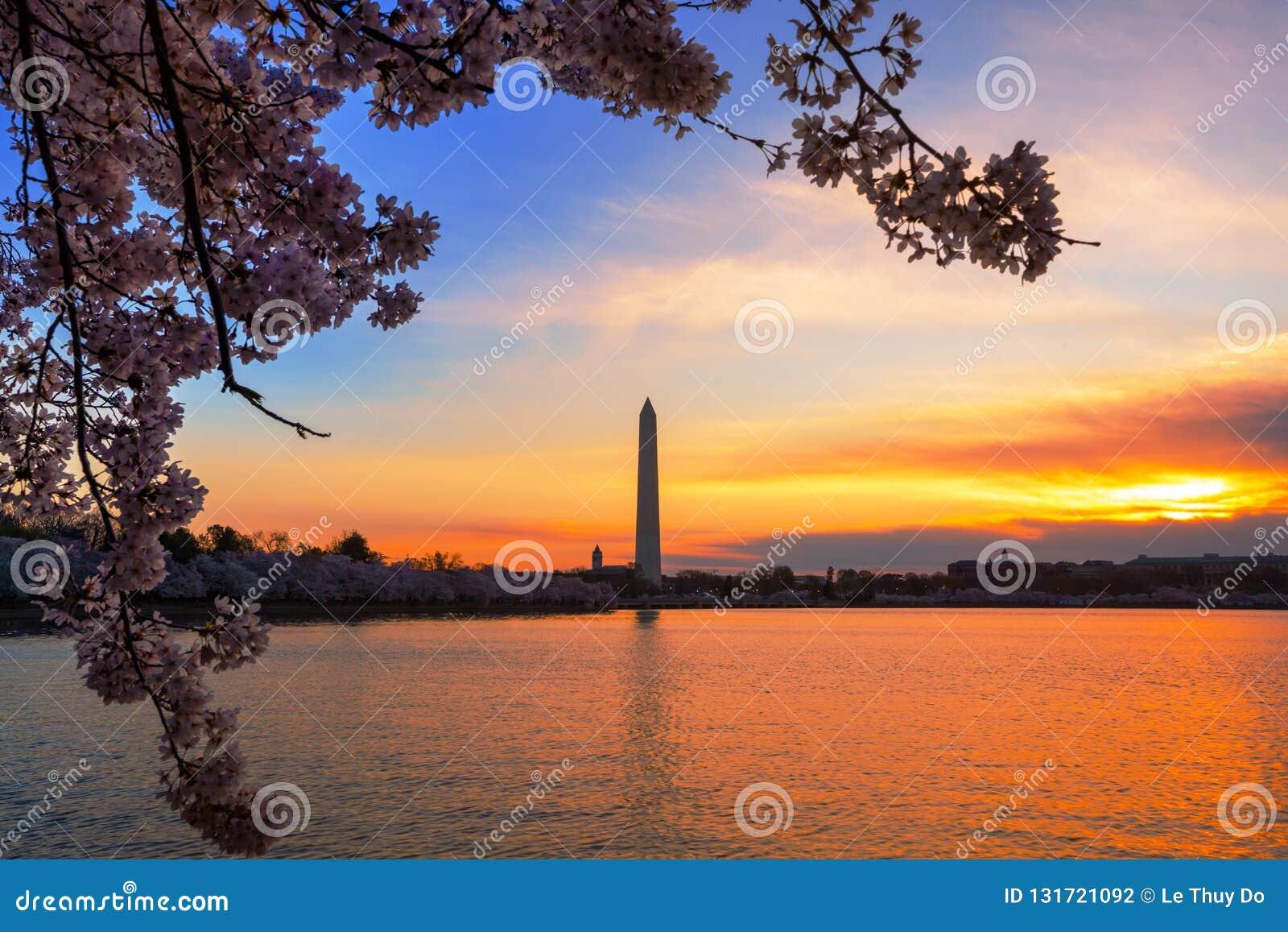Otta på den tidvattens- handfatet i Washington DC, under Cherry Blossom Festival med monumentet på andra sidan