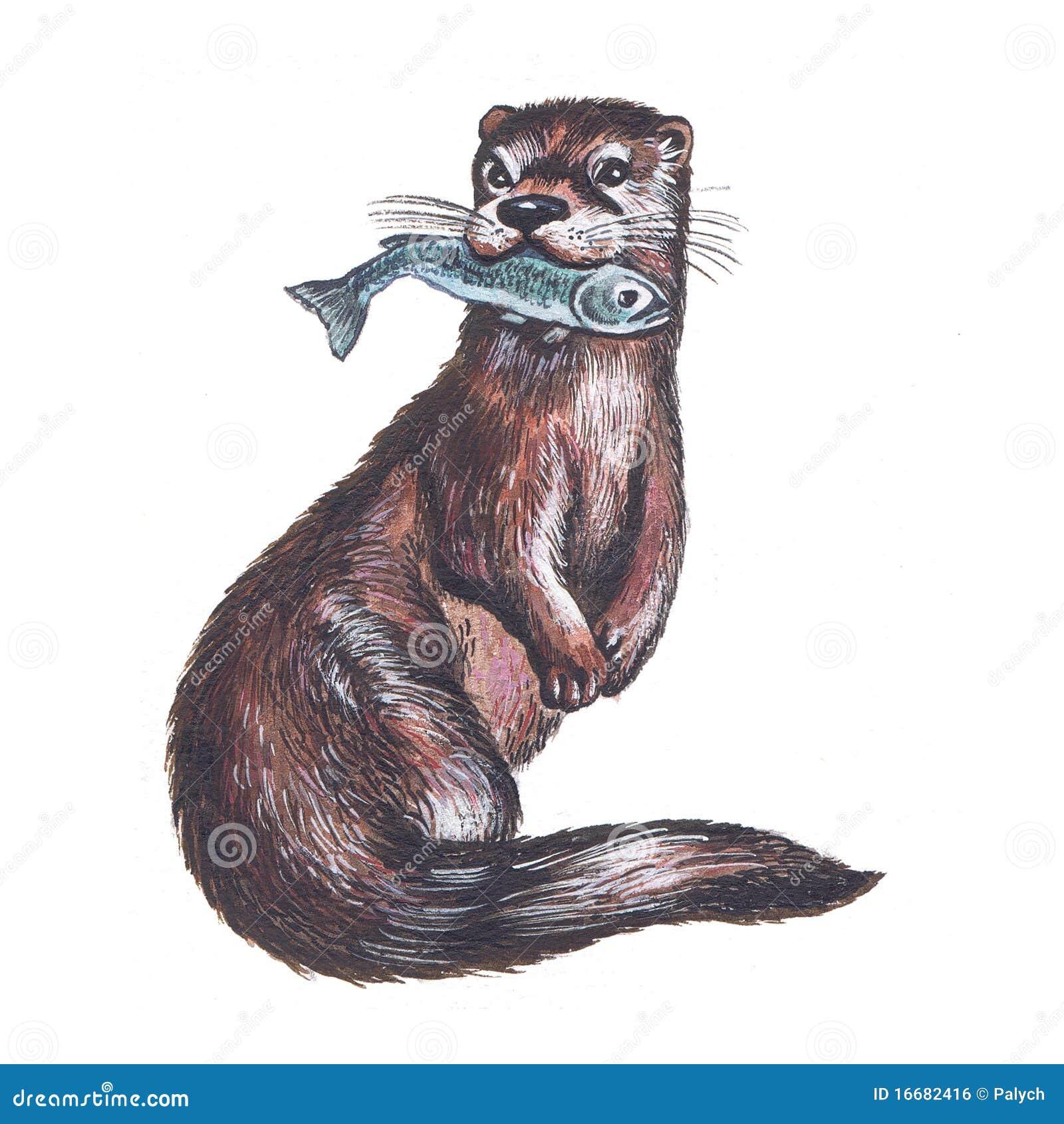 Otter Stock Illustration Image Of Illustration Aquatic