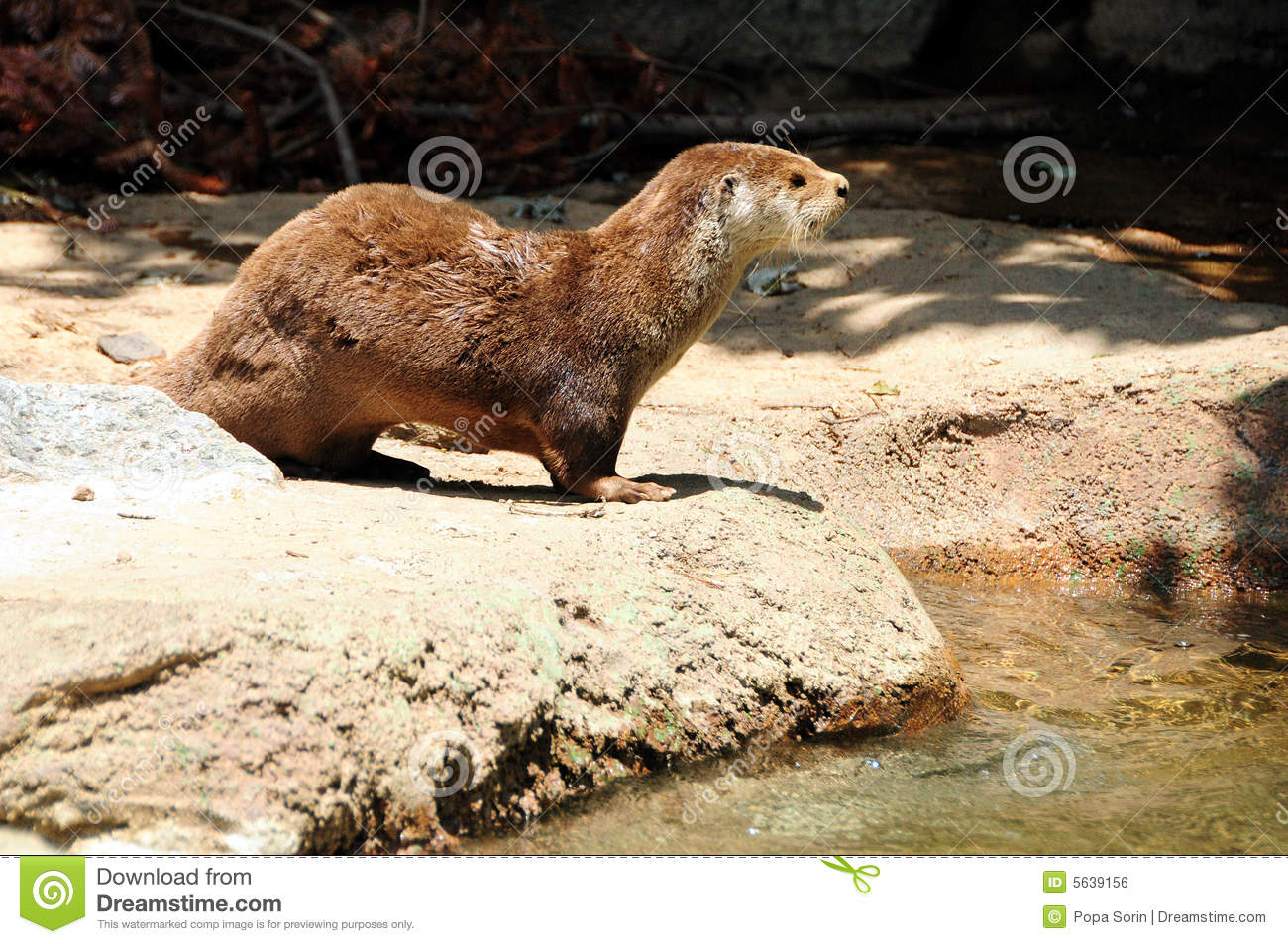 Otter royalty free stock image image 5639156 for Otter fish houses