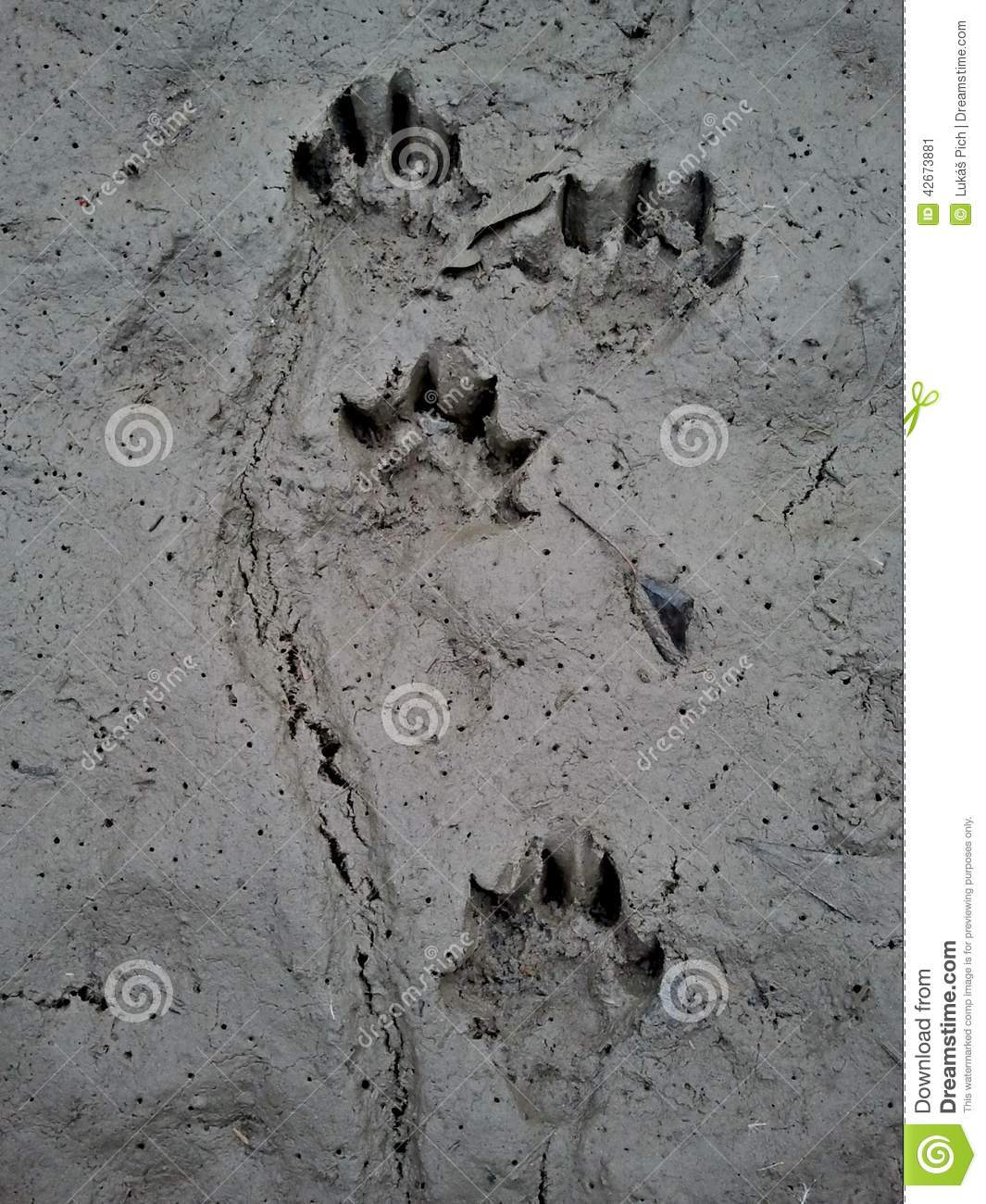 Who Was Here Discovering Wild Animal Tracks Millbrook