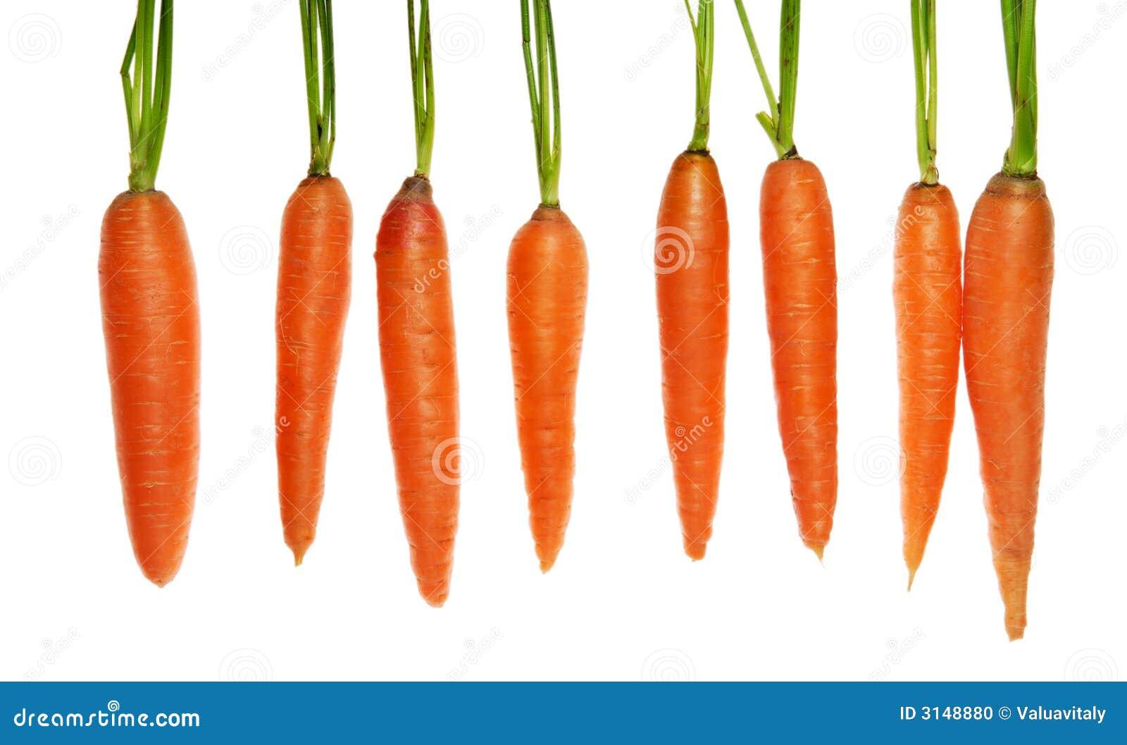 Otto carote