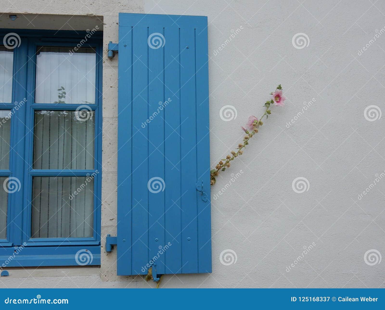 Otturatore blu della finestra con il fiore rosa