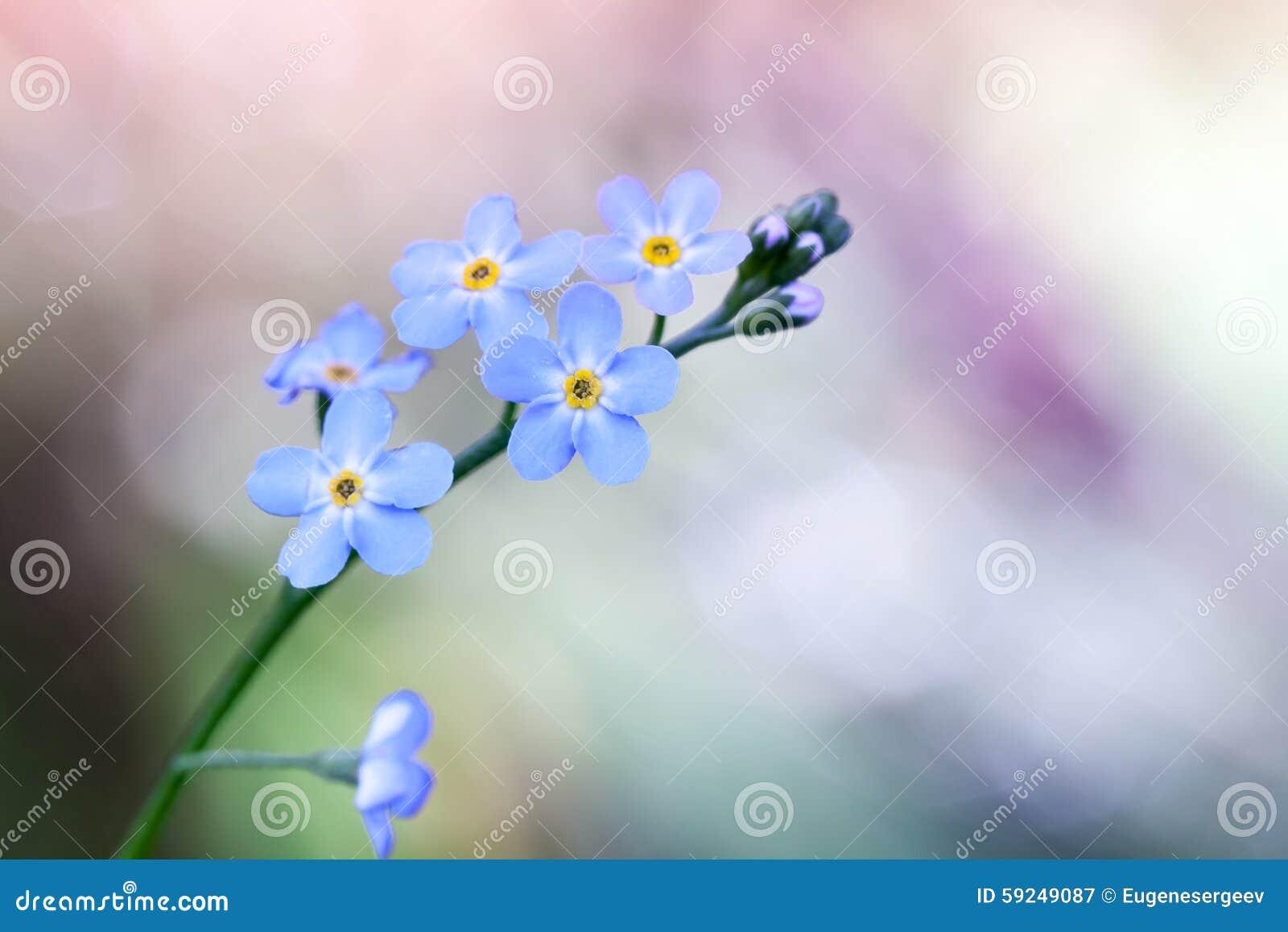 Oubliez-moi pas des fleurs sur le fond coloré
