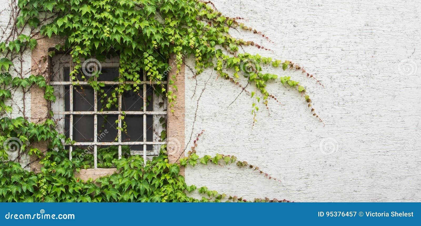 Oud die venster met een rooster met druivenbladeren wordt behandeld, een minimalistic mening met een witte geweven muurachtergron