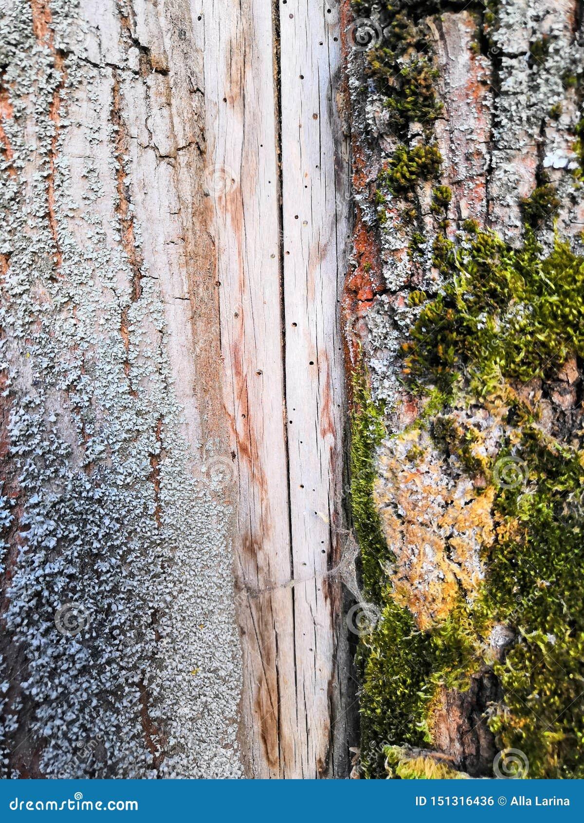 Oud mooi structureel bruin grijs en groen mos