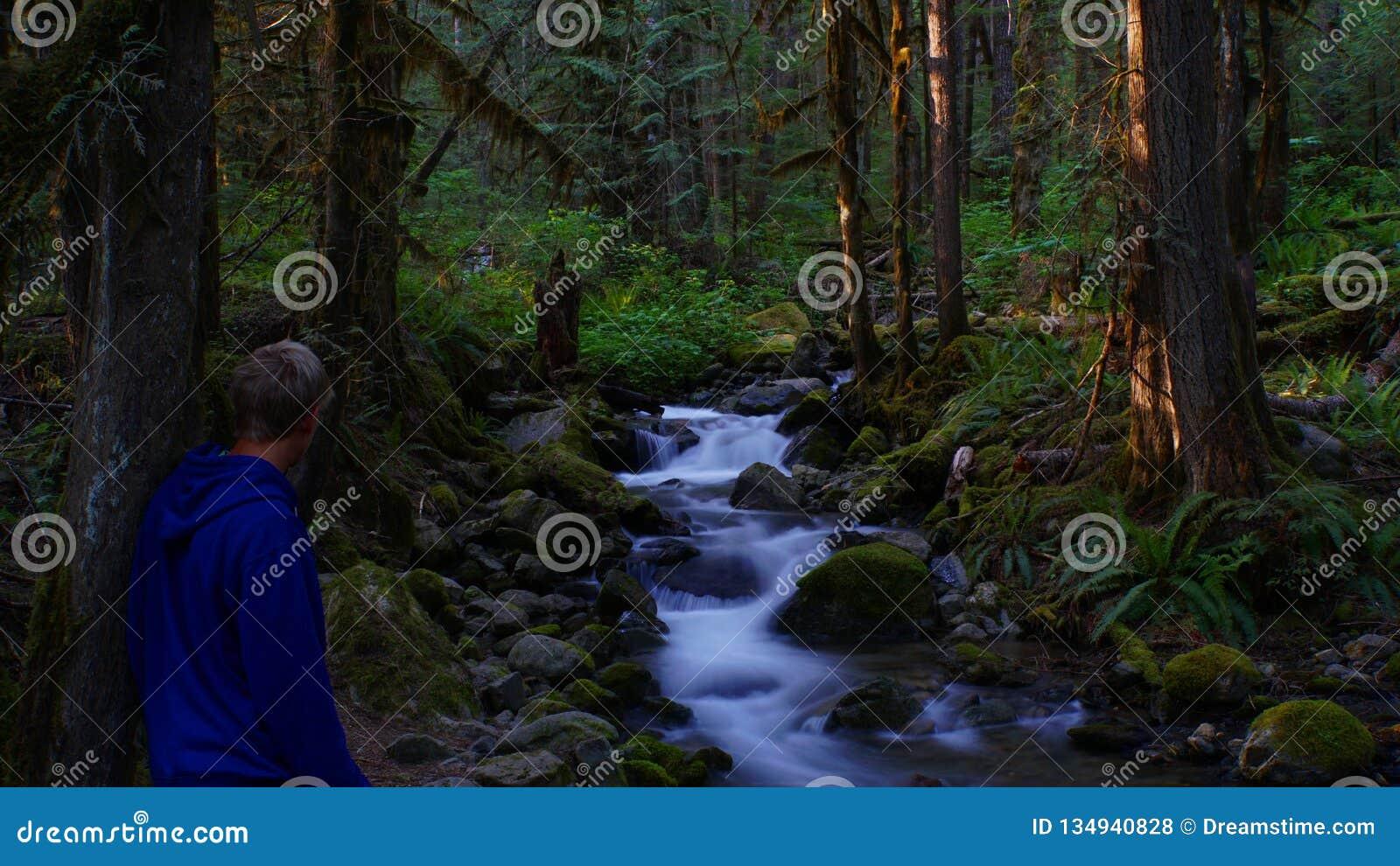 Oud verrukt bos in Washington - de V.S.