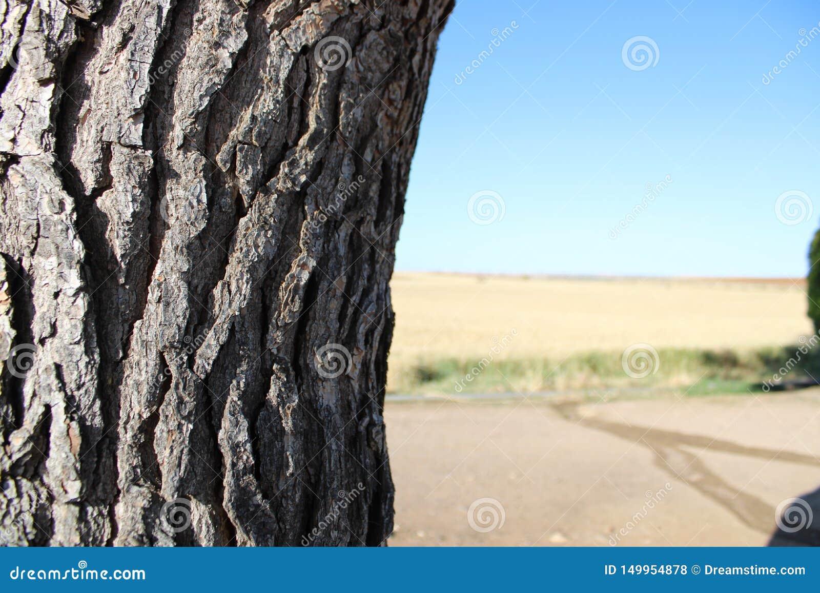 Oude boom in een landbouwbedrijf van Spanje