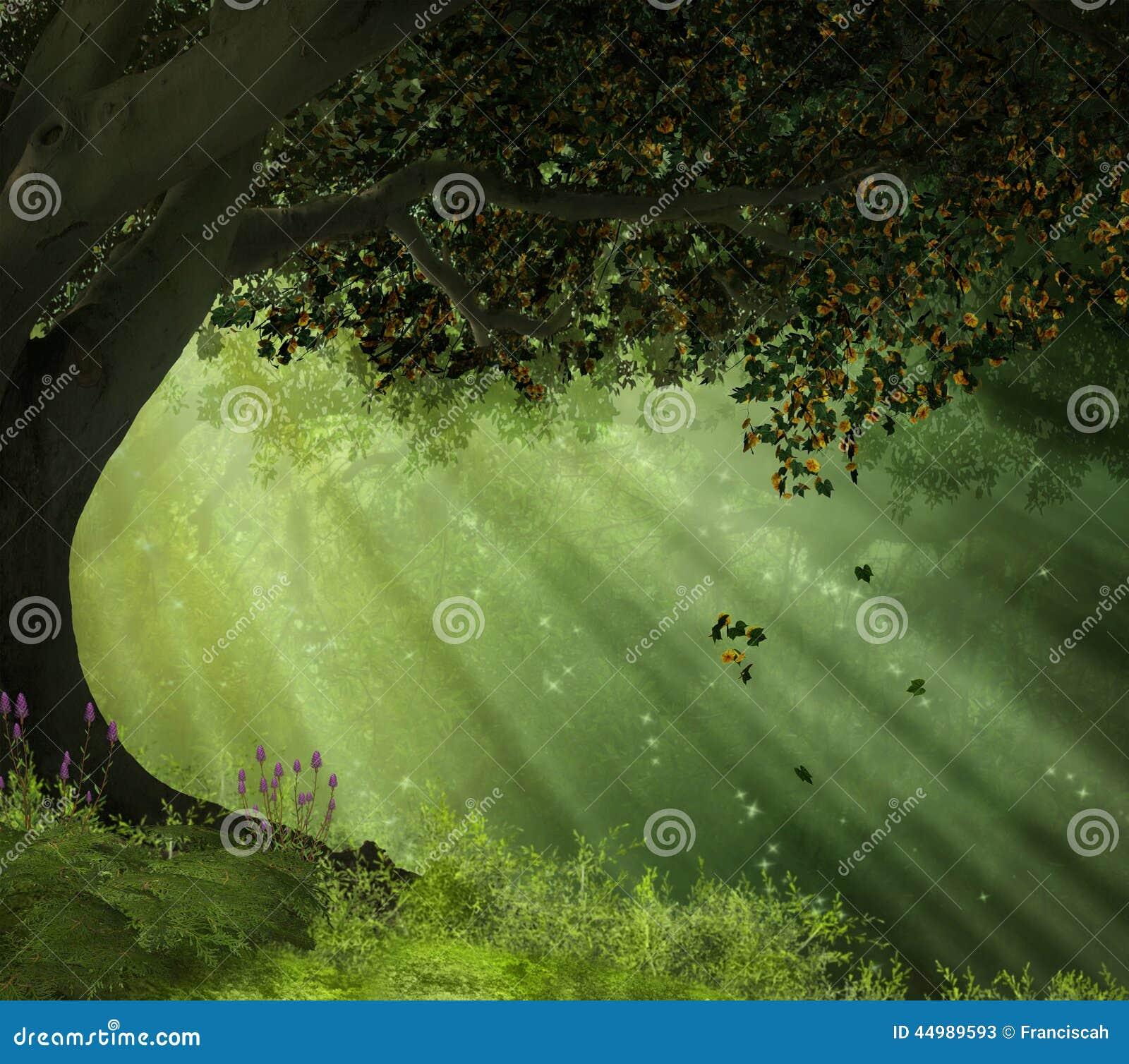 Een oude boom in een bos met stralen van lichten die de scène