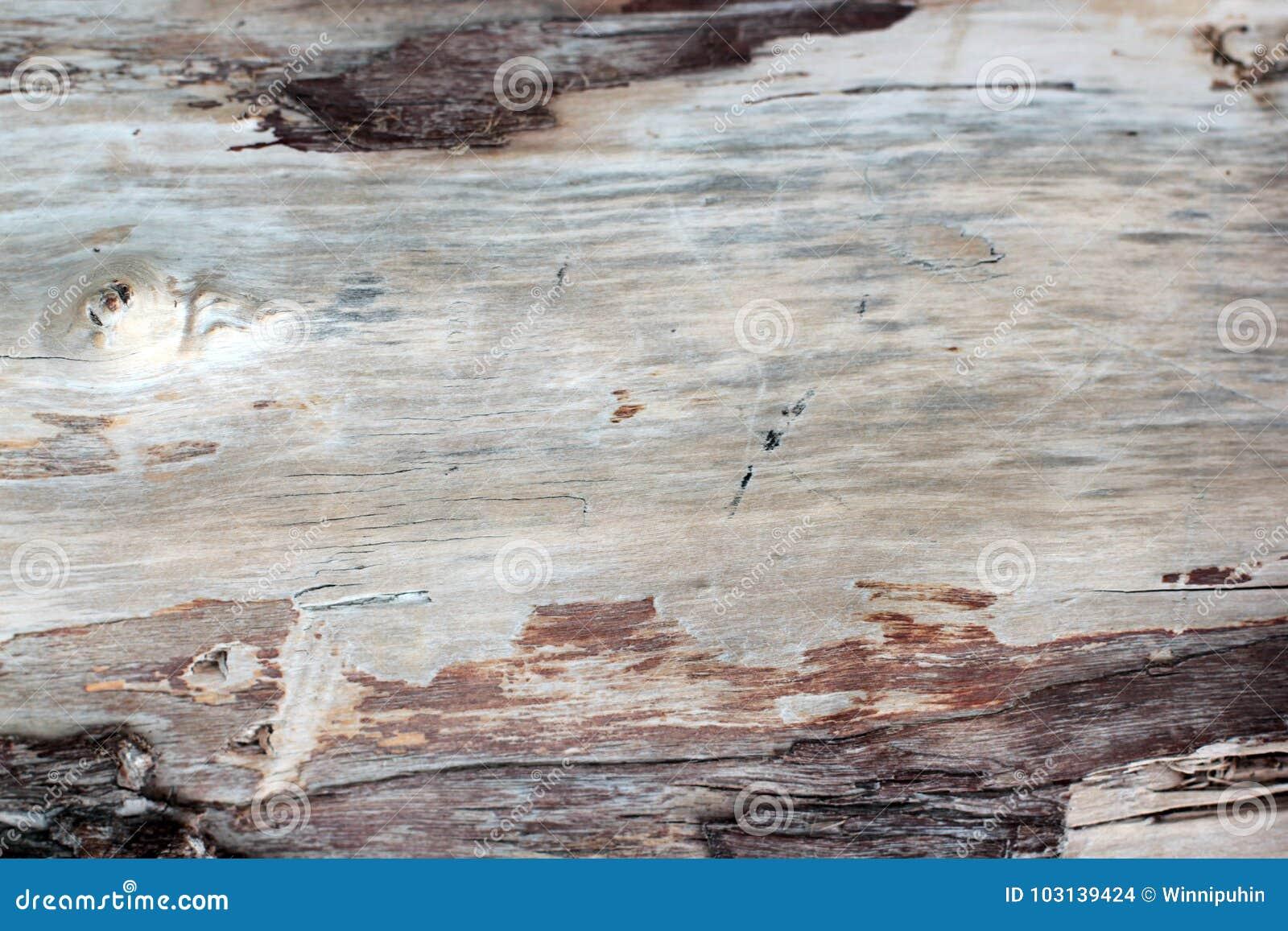 Oude dode bosboomtextuur zonder schors, met vele sporen van tijd - barsten Het close-up vangt, bruikbaar als achtergrond